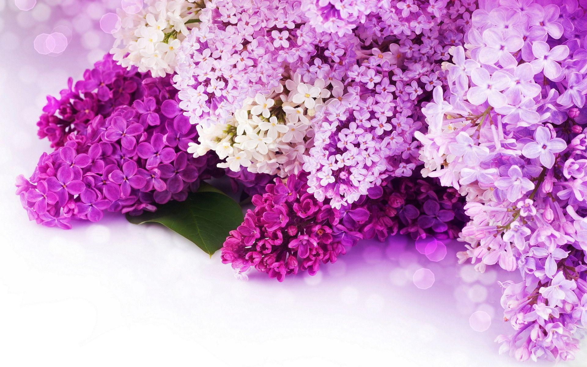 Free Photo Purple Flower Hd Wallpaper Leaves Nature Free
