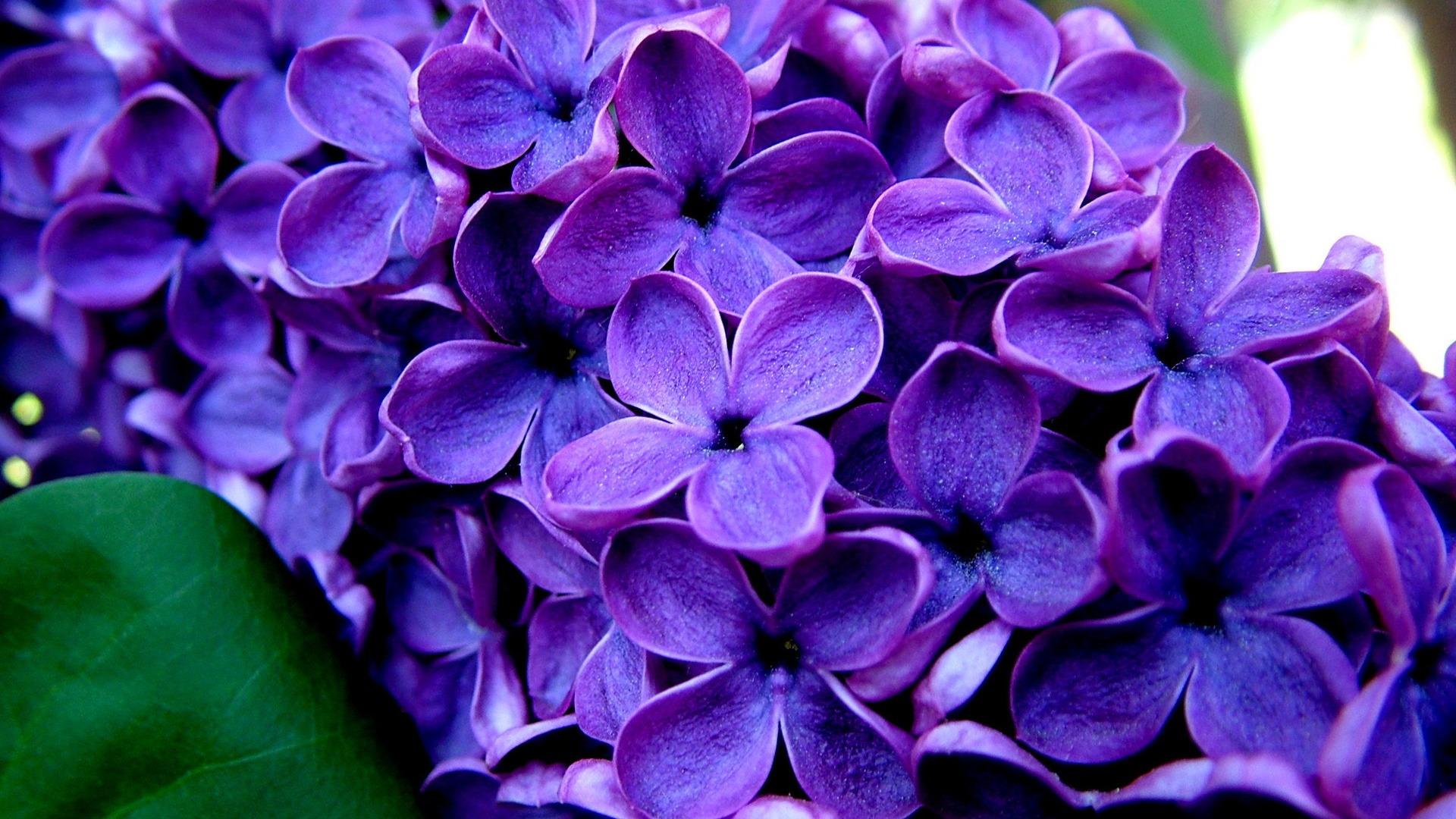 Purple flower photo