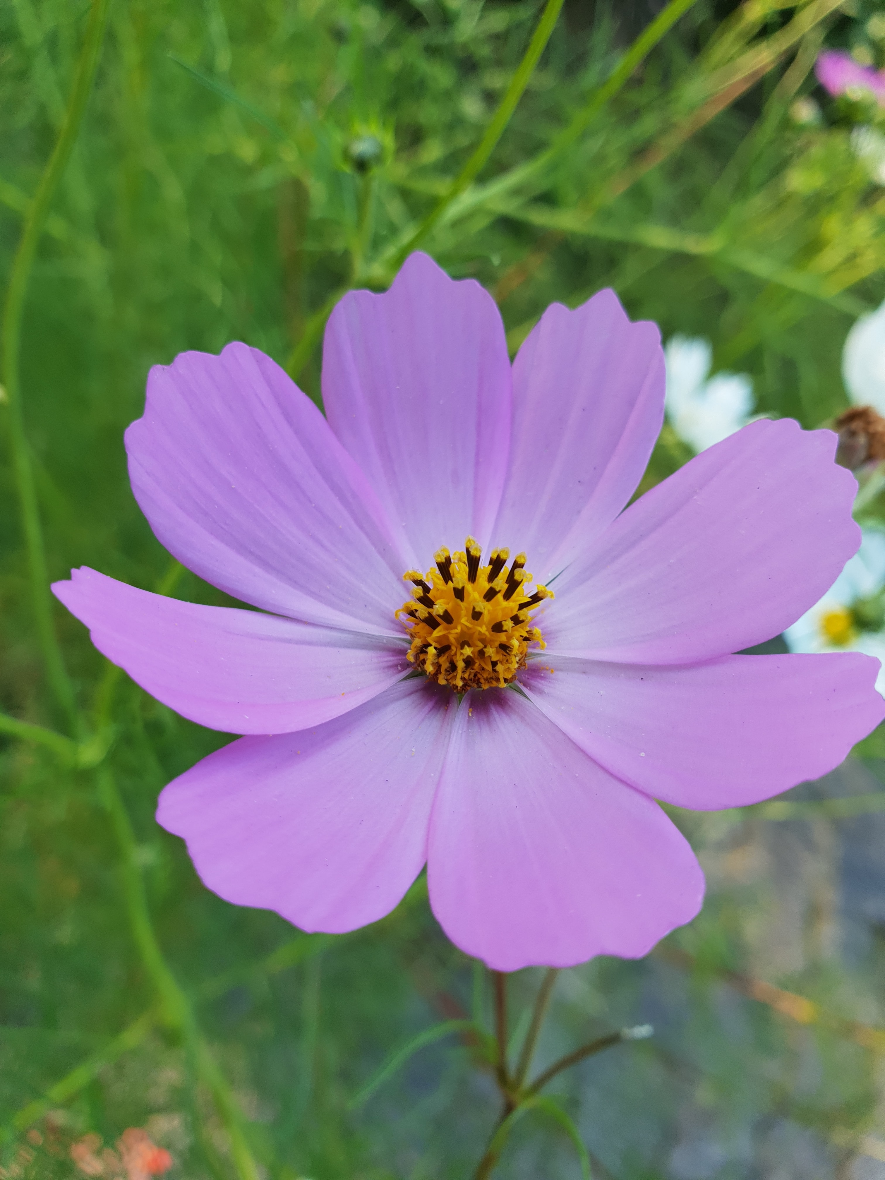 Purple flower in the grass photo