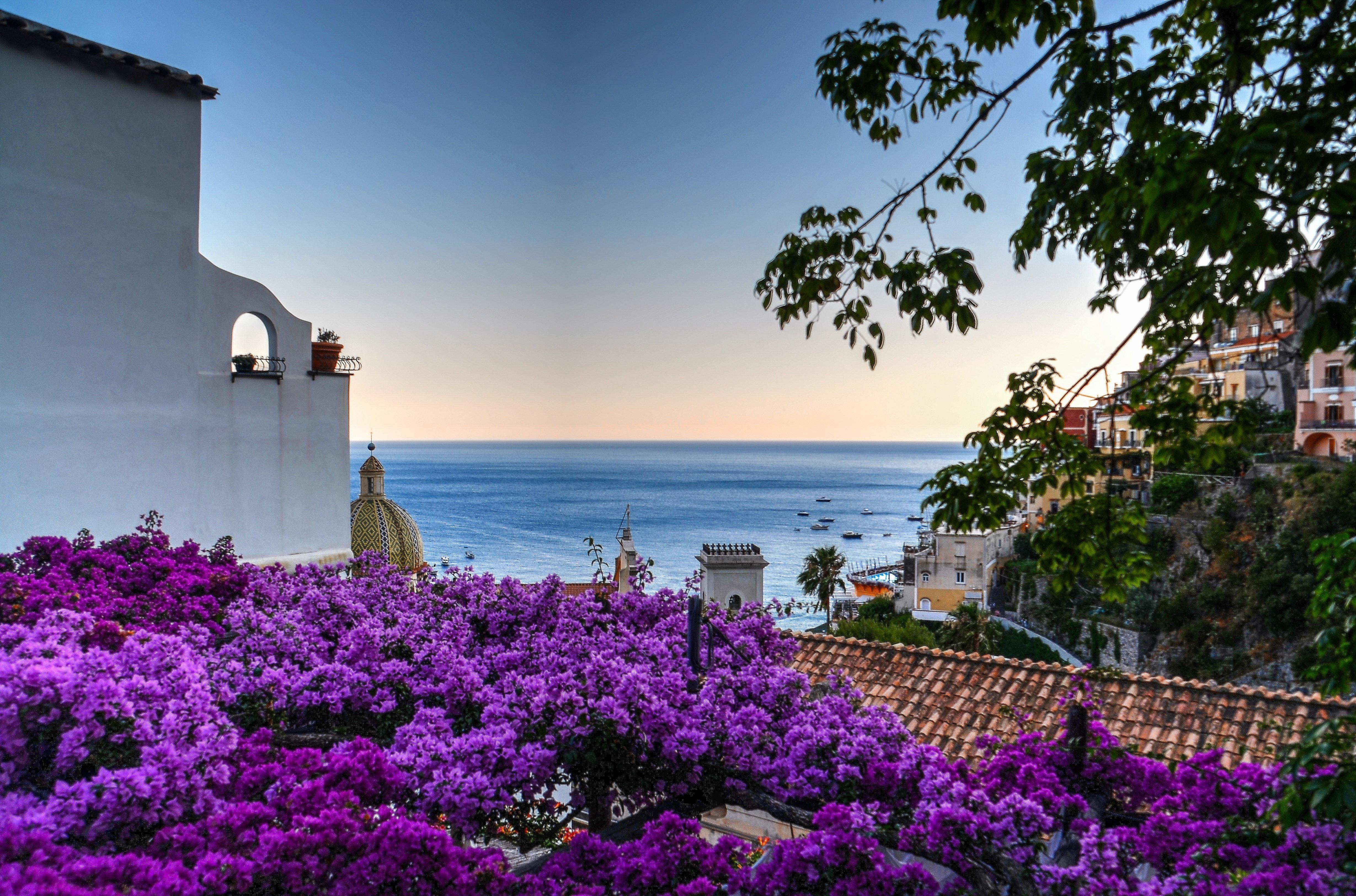 Purple Flower Lot, Architecture, Ocean, Village, View, HQ Photo