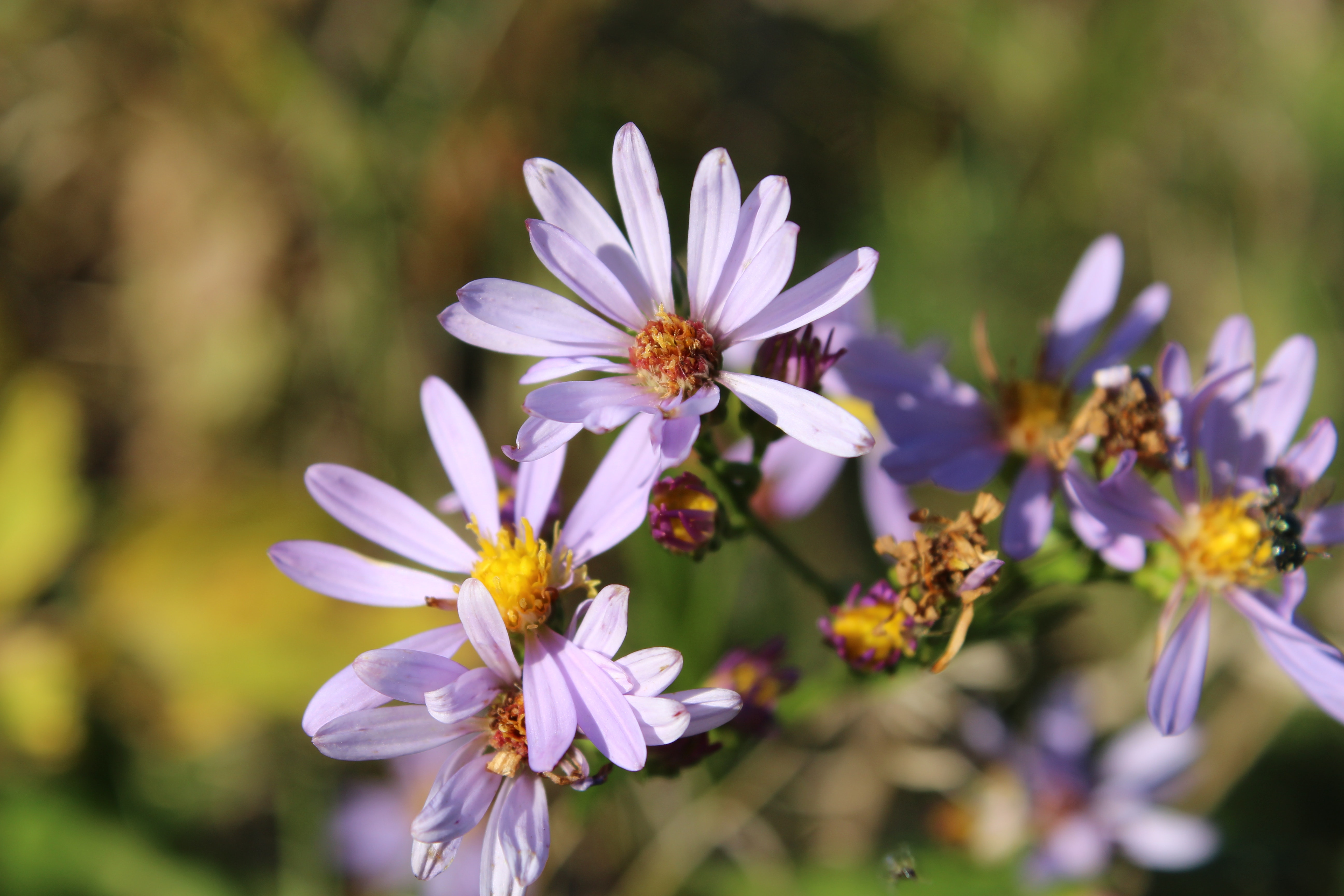 Purple Flower Macro Shot Shallow Focus, Growth, Garden, Insect, Flowers, HQ Photo