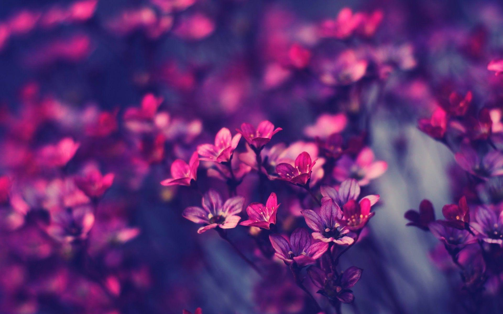 Free Photo Purple Flower Wallpaper Beautiful Flowers