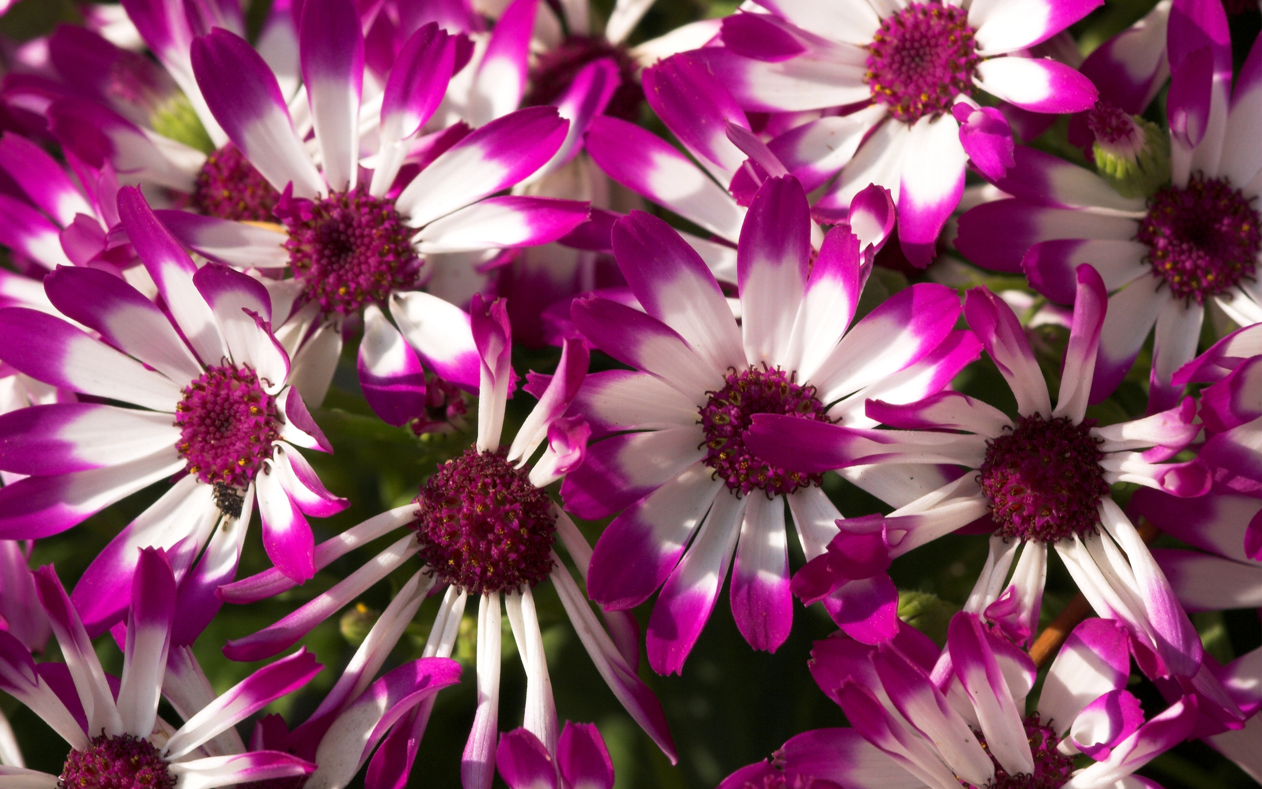Purple flower wallpaper photo