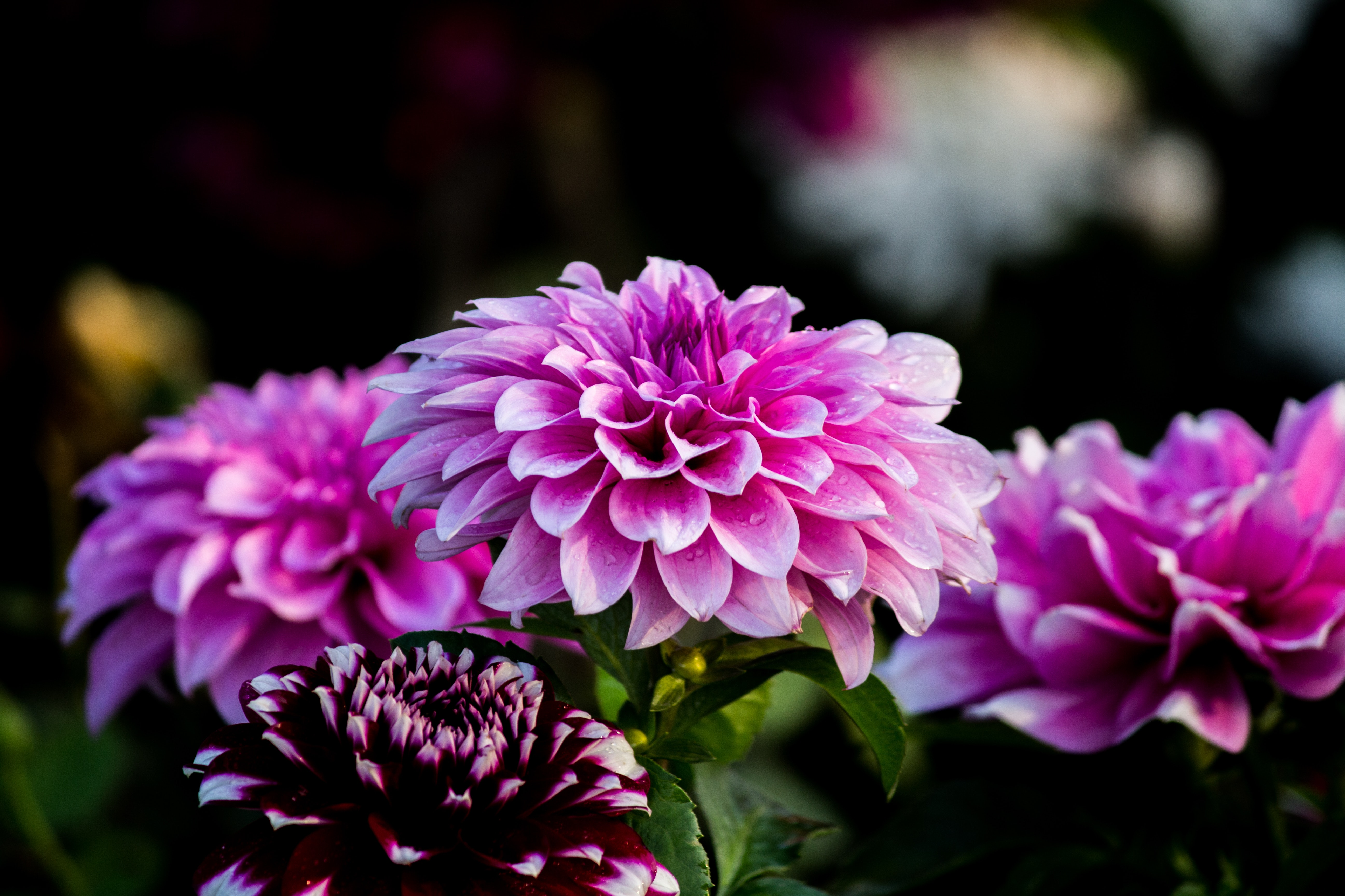 Purple flower wallpaper photo