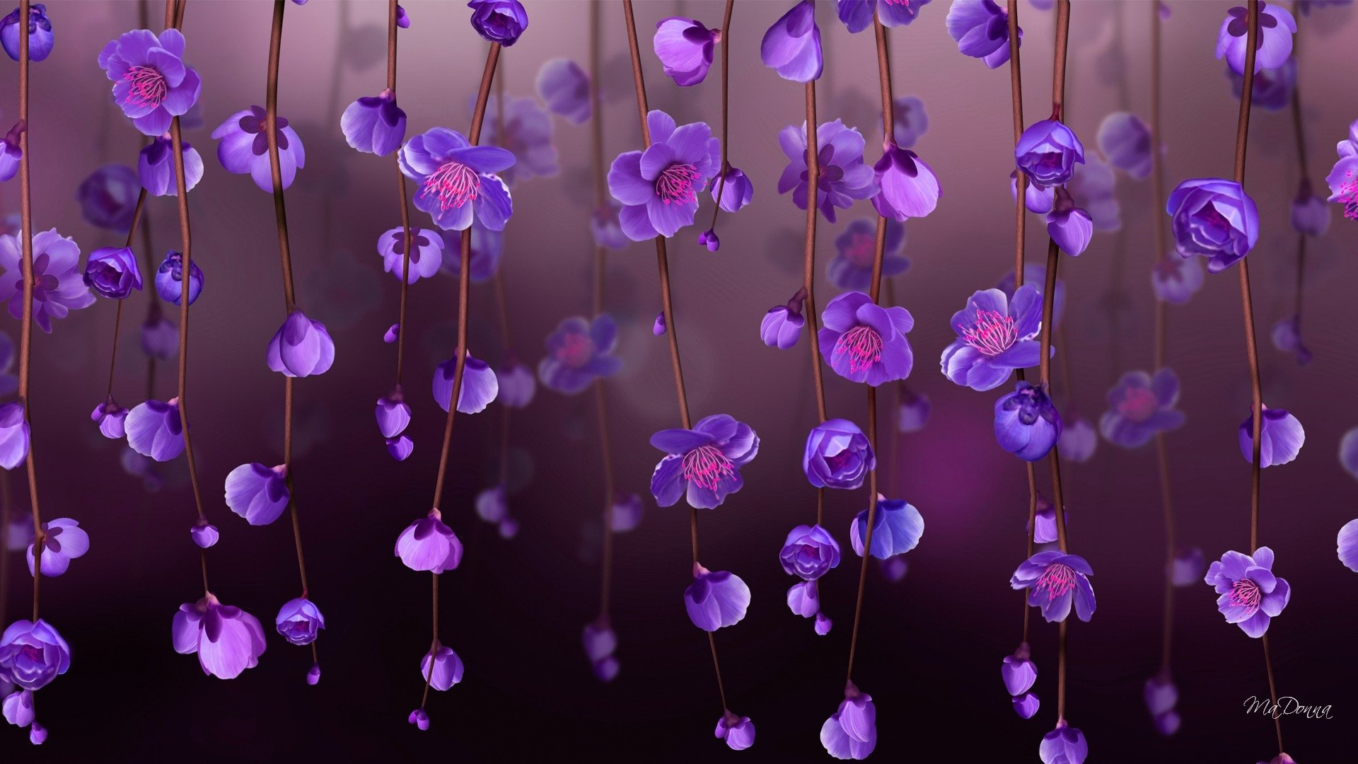 1406 Purple Flower HD Wallpapers | Background Images - Wallpaper Abyss