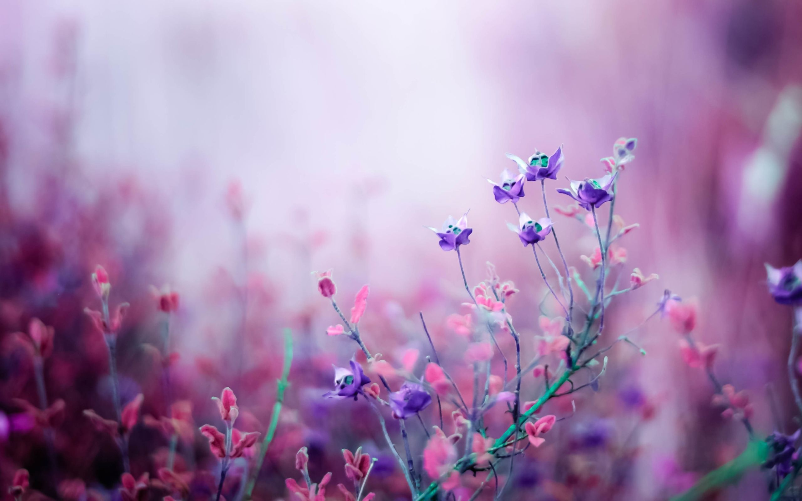 Free Purple Flower Wallpaper Photo « Long Wallpapers
