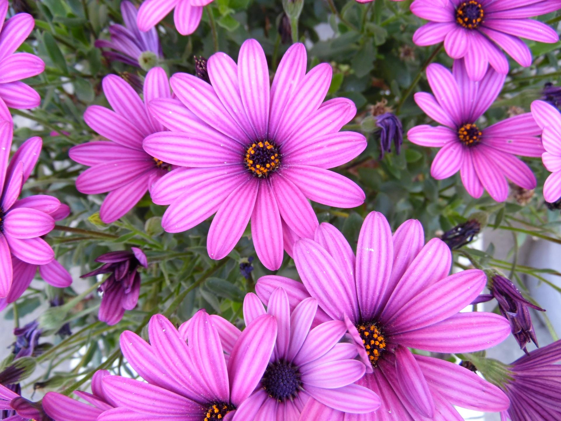 Free photo purple flowers outdoors petal little free download purple flowers mightylinksfo
