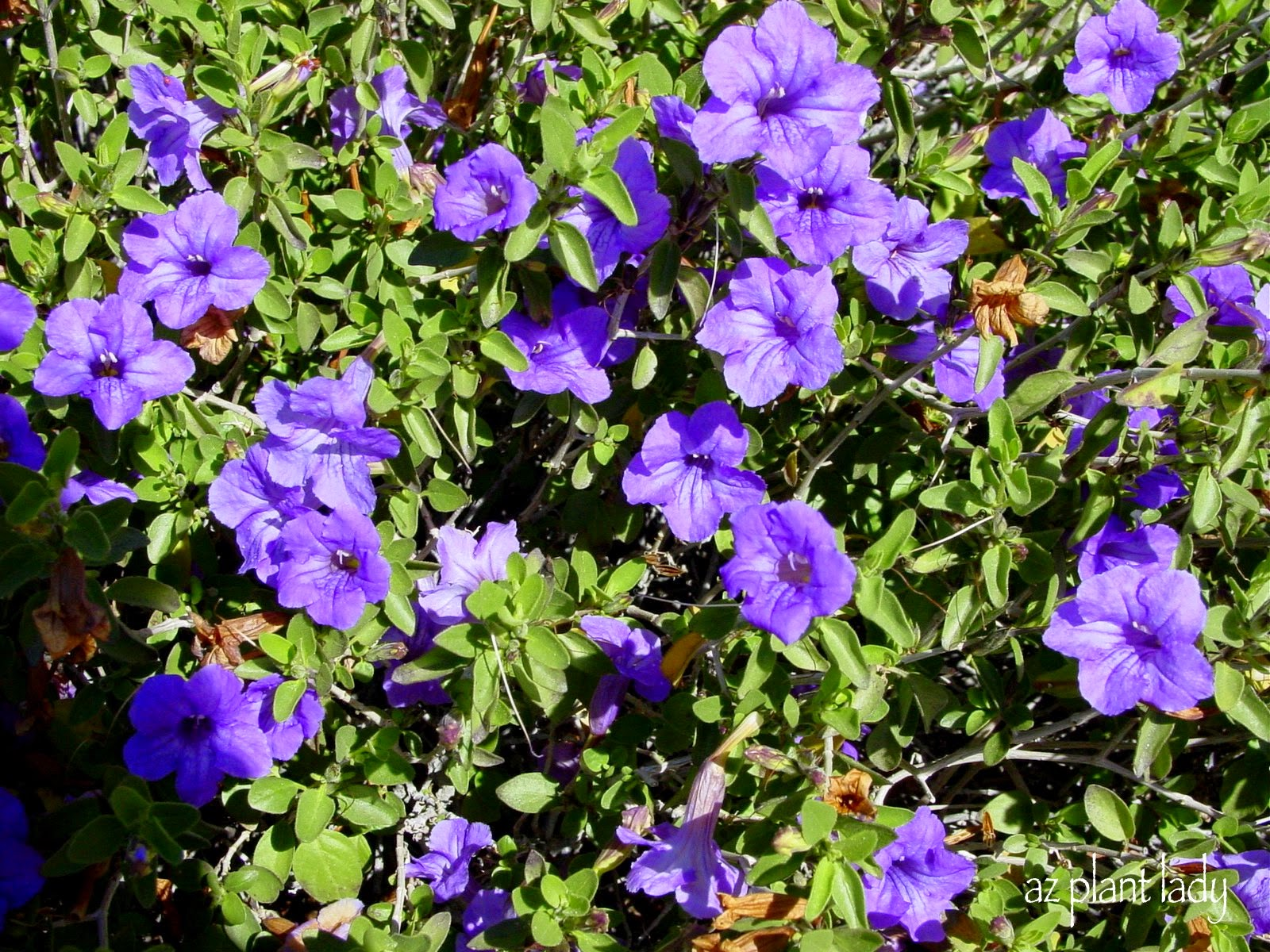 Free Photo Purple Flowers Pretty Purple Plant Free Download