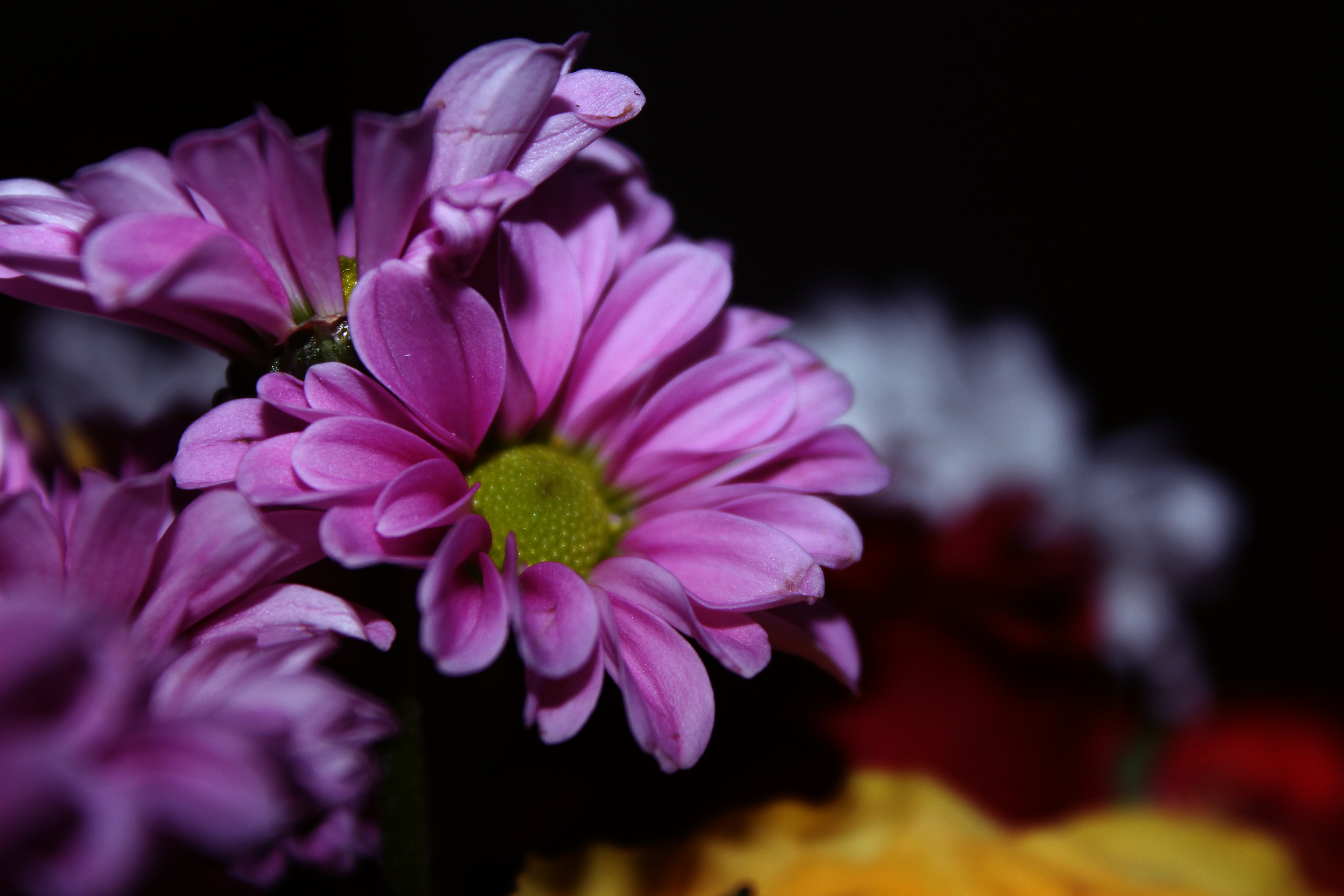 Free Photo Purple Flowers Nature Growing Petals Free Download