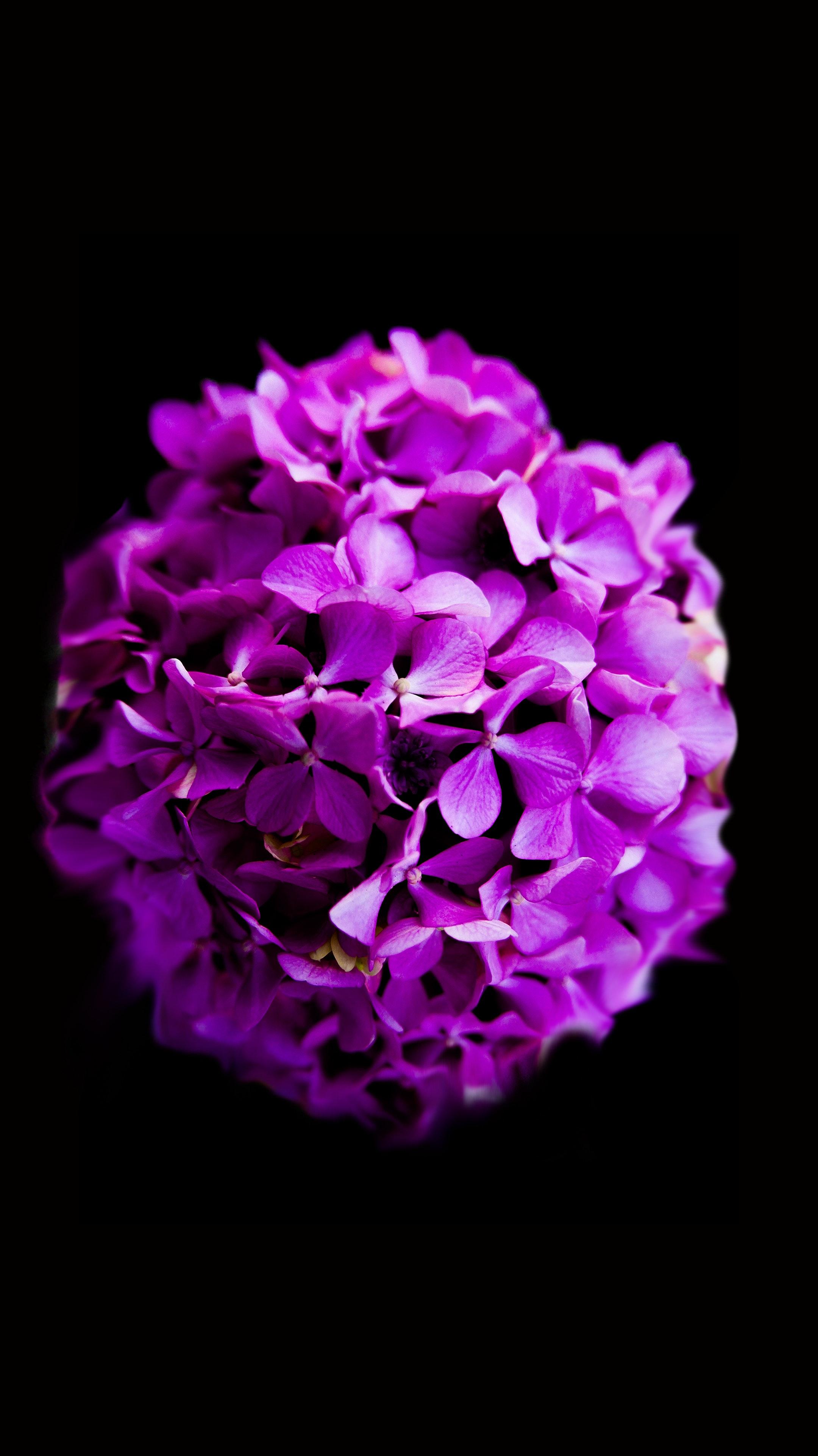 Free Photo Purple Flowers Petal Petals Plant Free Download