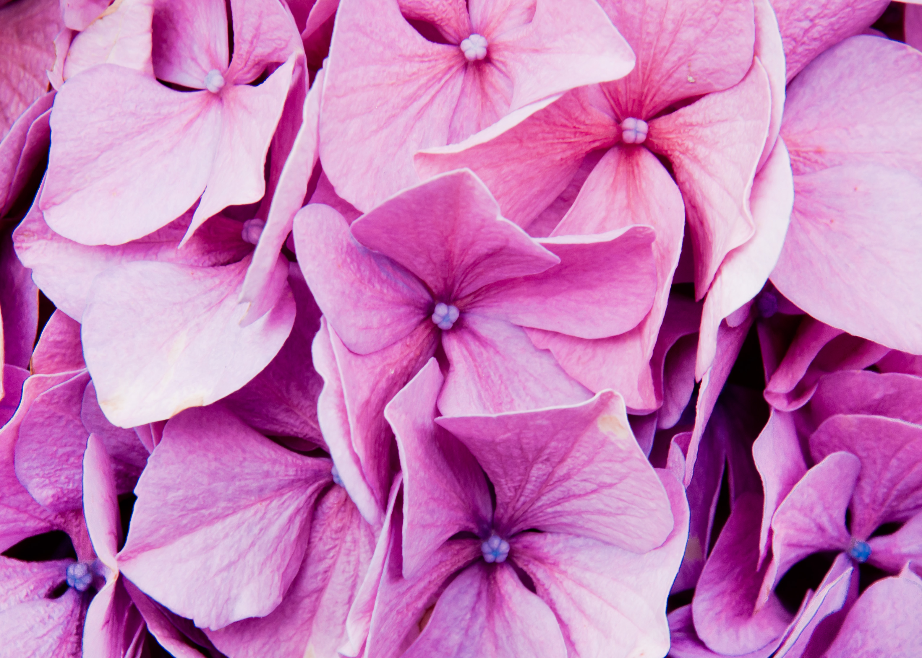 Free Photo Purple Flowers Plant Plants Purple Free Download