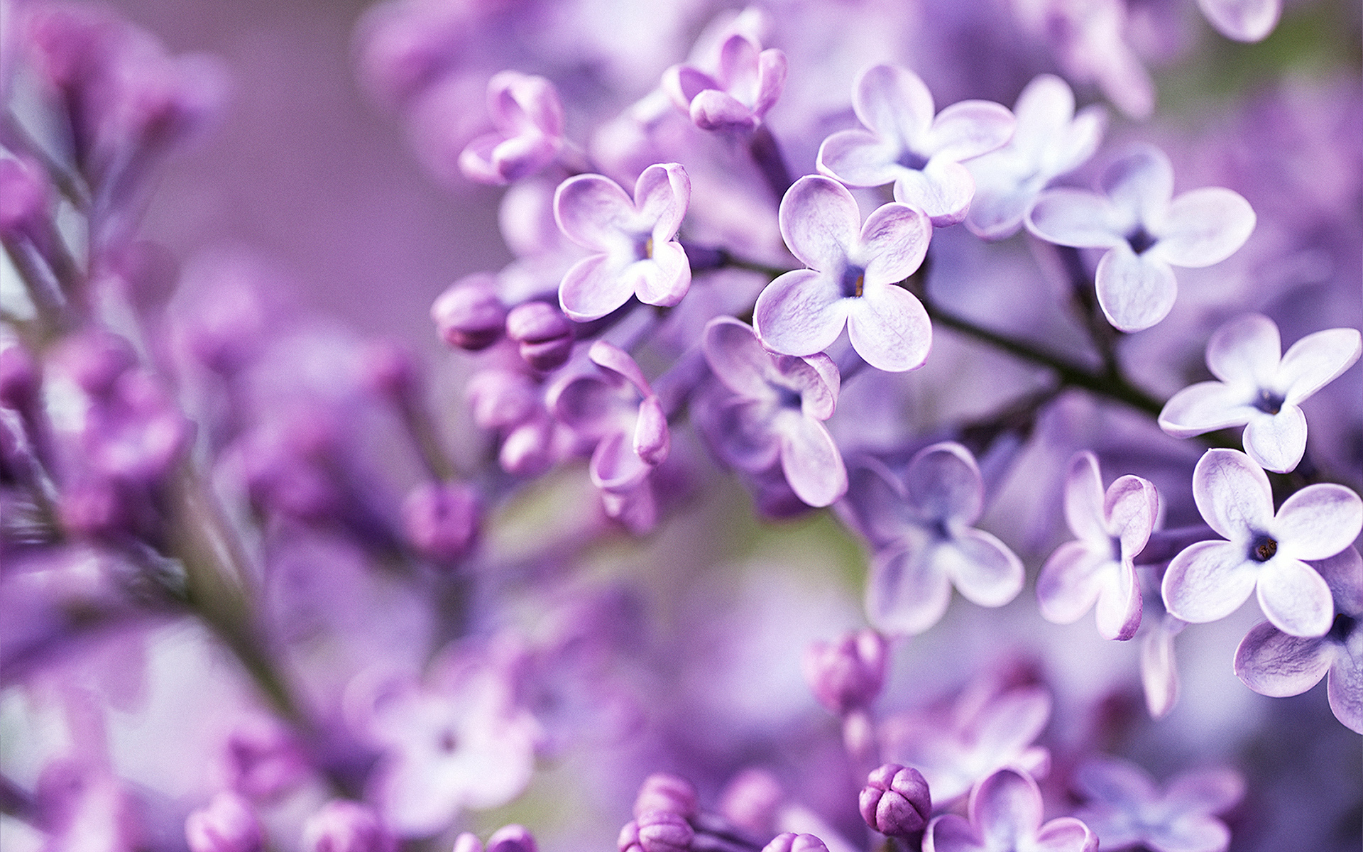Spring Purple Flowers Wallpapers | HD Wallpapers | ID #12714