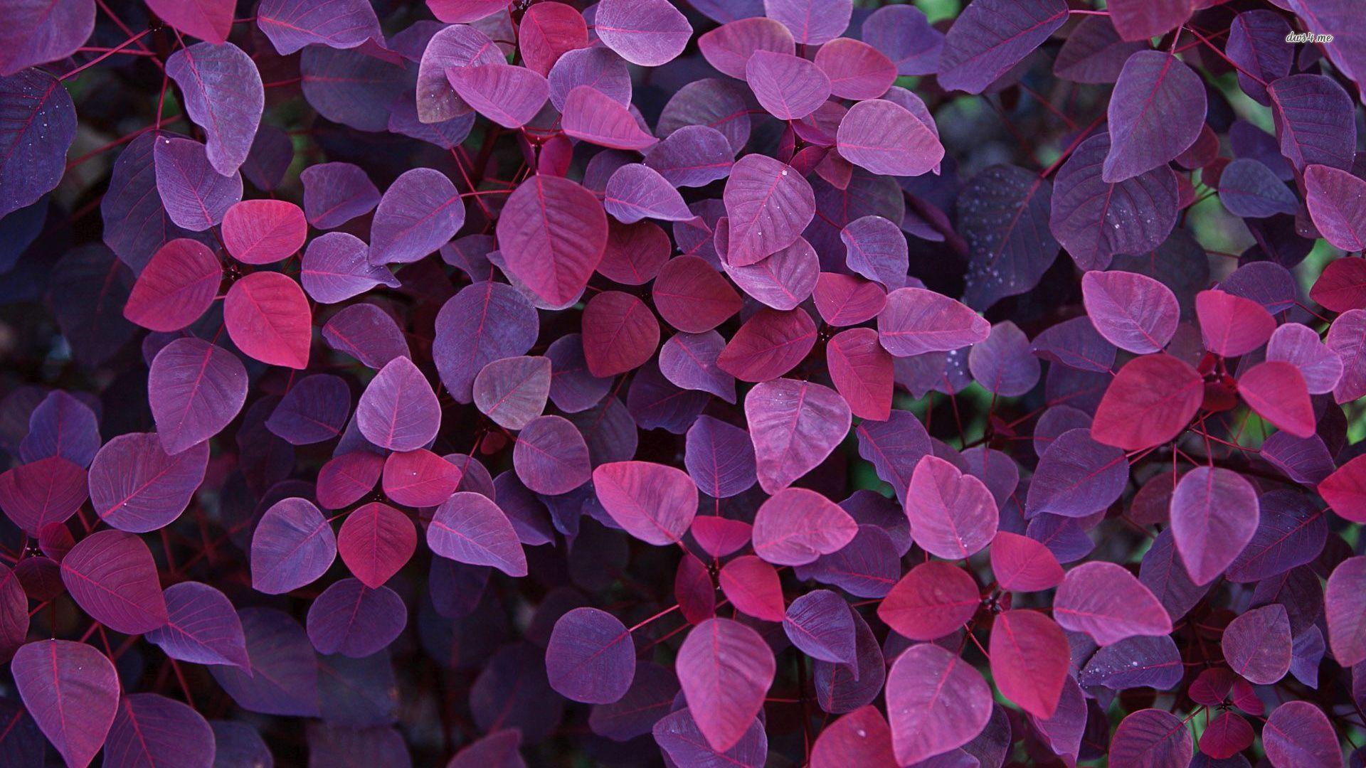 purple-leaf-wallpaper-1 – First Step, Inc.