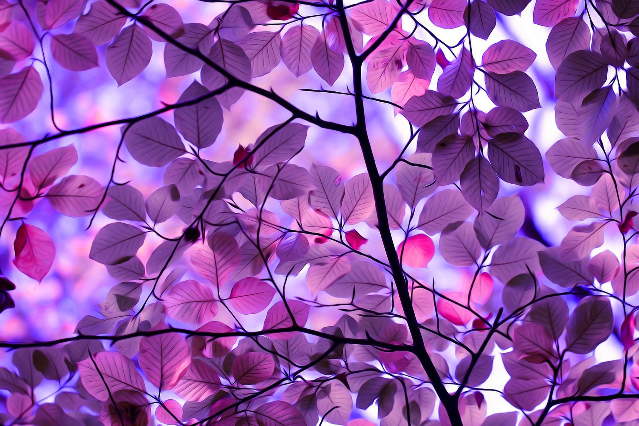 tree, autumn, leaves, autumn splendor, purple leaves :: Wallpapers