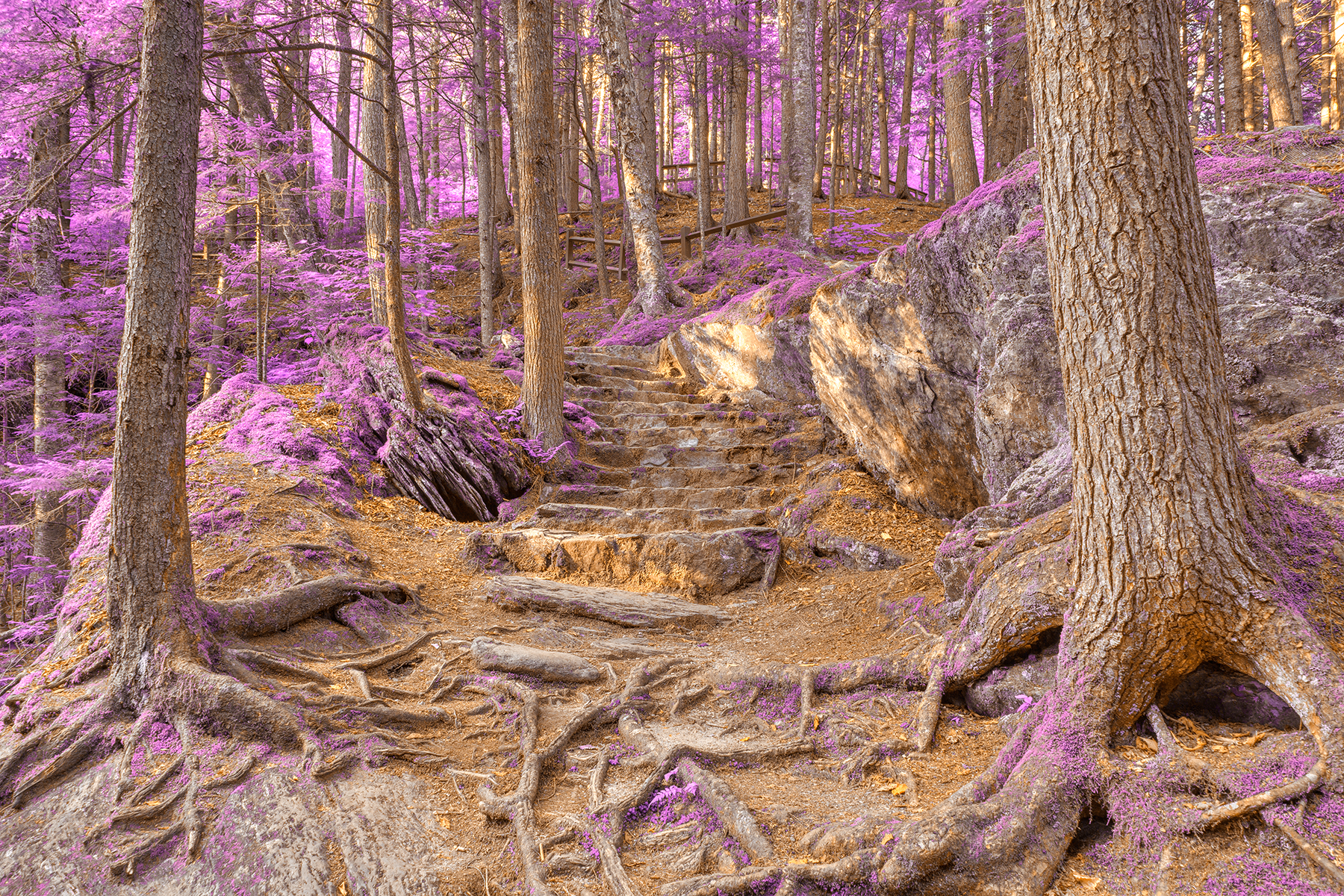 Purple Mountain Forest Trail - HDR, Adventure, Rocks, Stairs, Staircase, HQ Photo