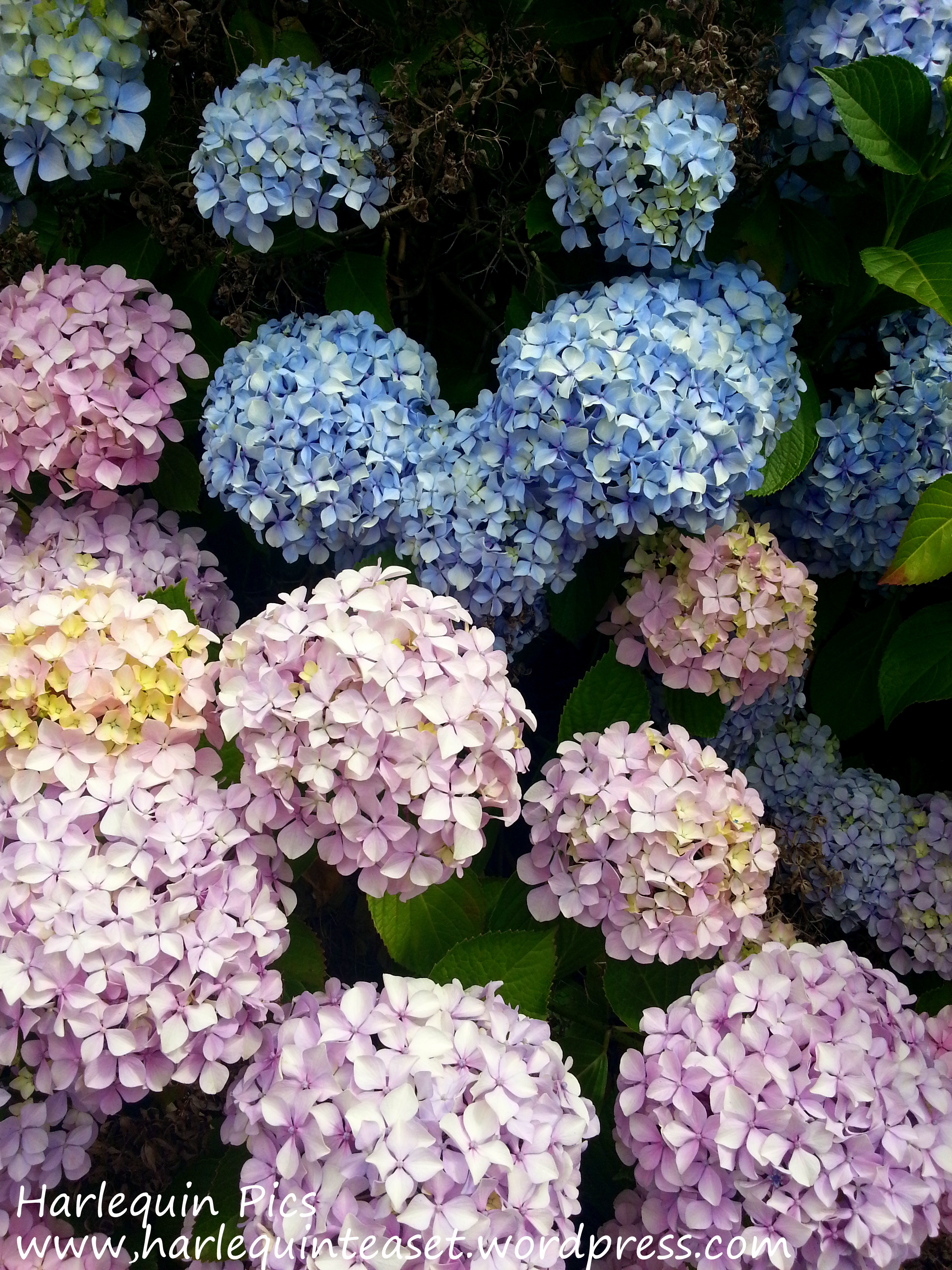 Bundles of Blue & Pink – The Harlequin Tea Set