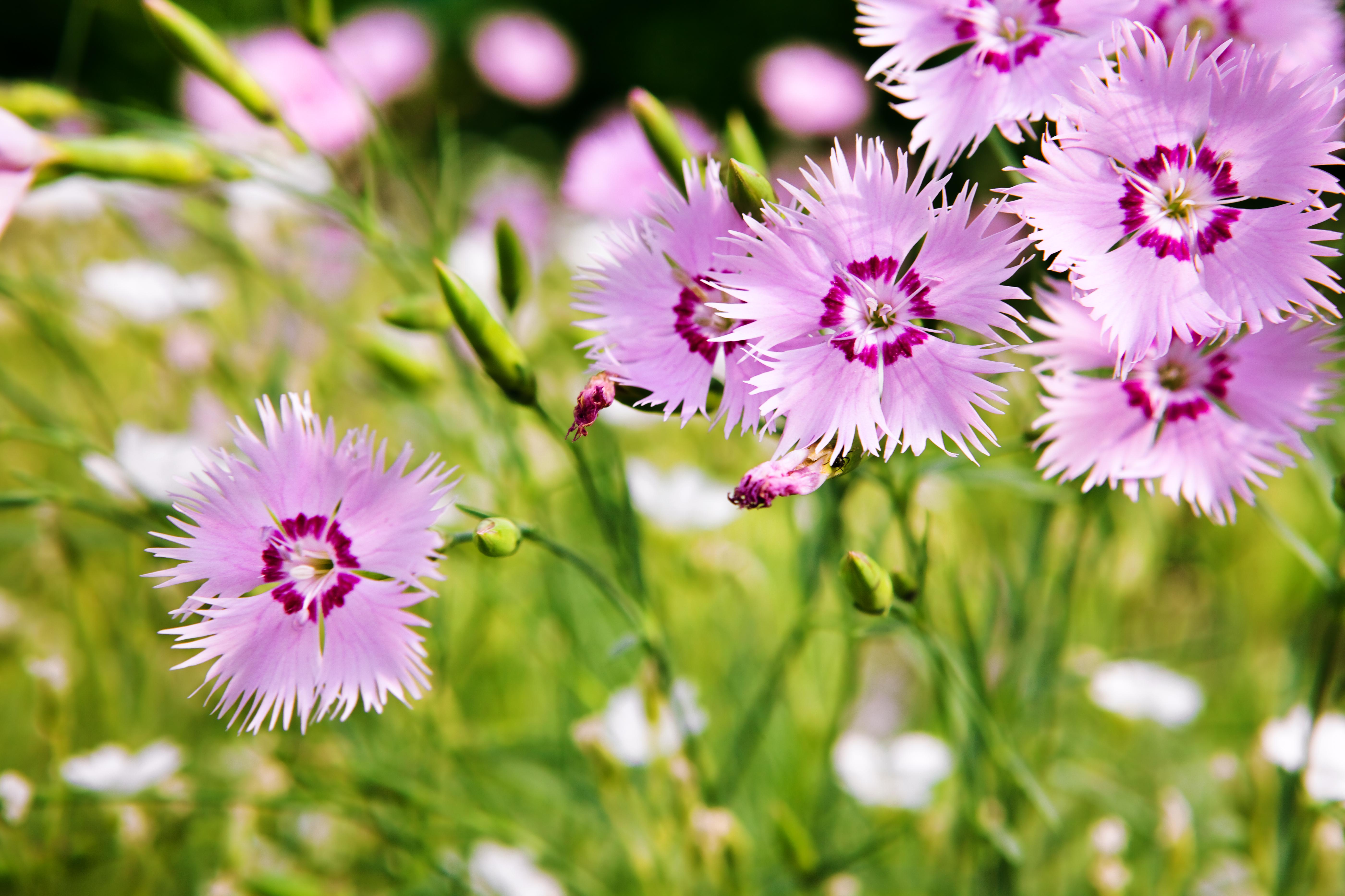 Free Photo Purple Small Flowers Petal Purple Small Free