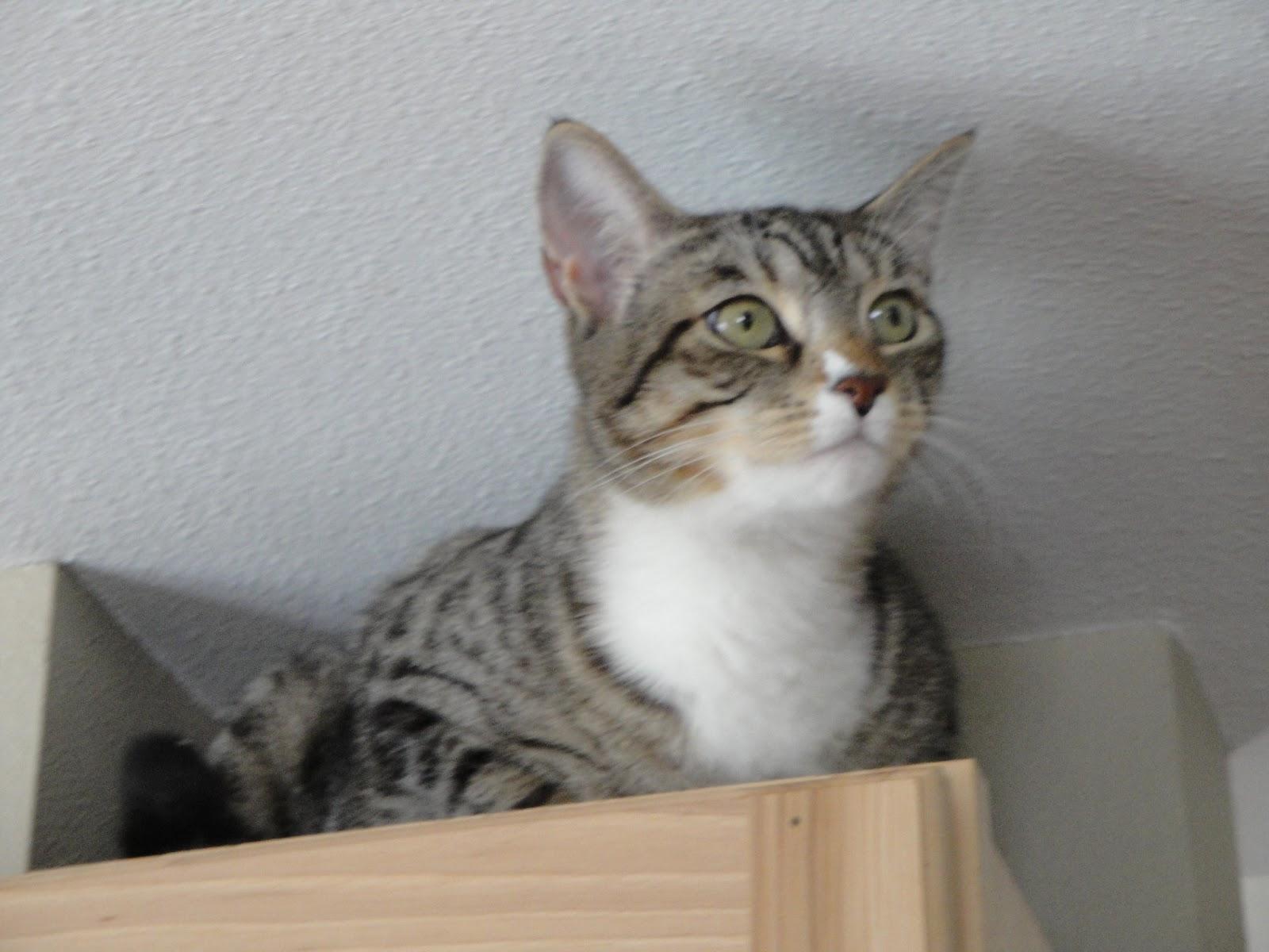 Pussy cat photo