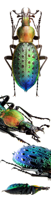 743 best Beetles etc... images on Pinterest | Beautiful, Butterflies ...