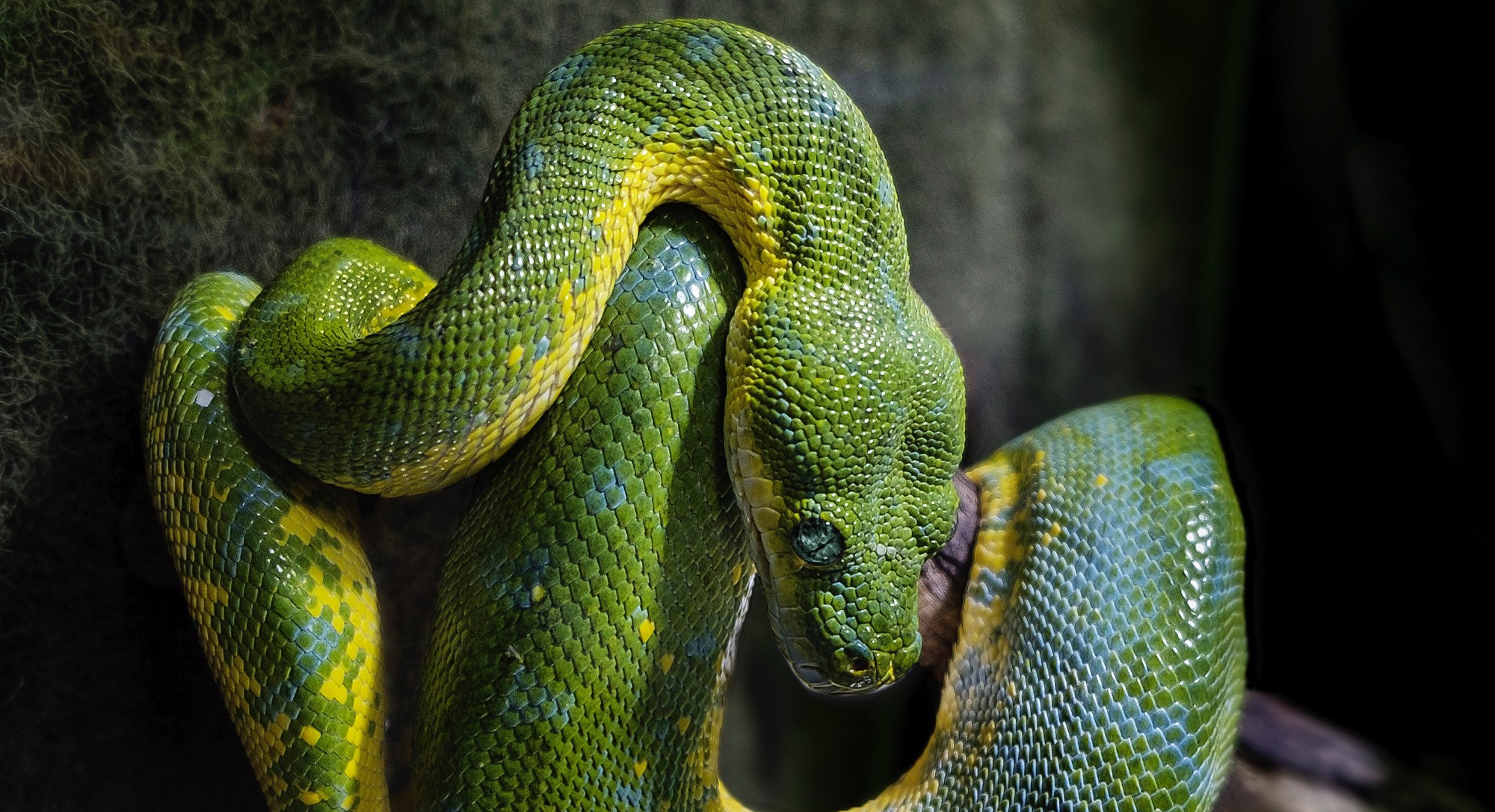 All the things I hate about Python – Nathan Murthy – Medium