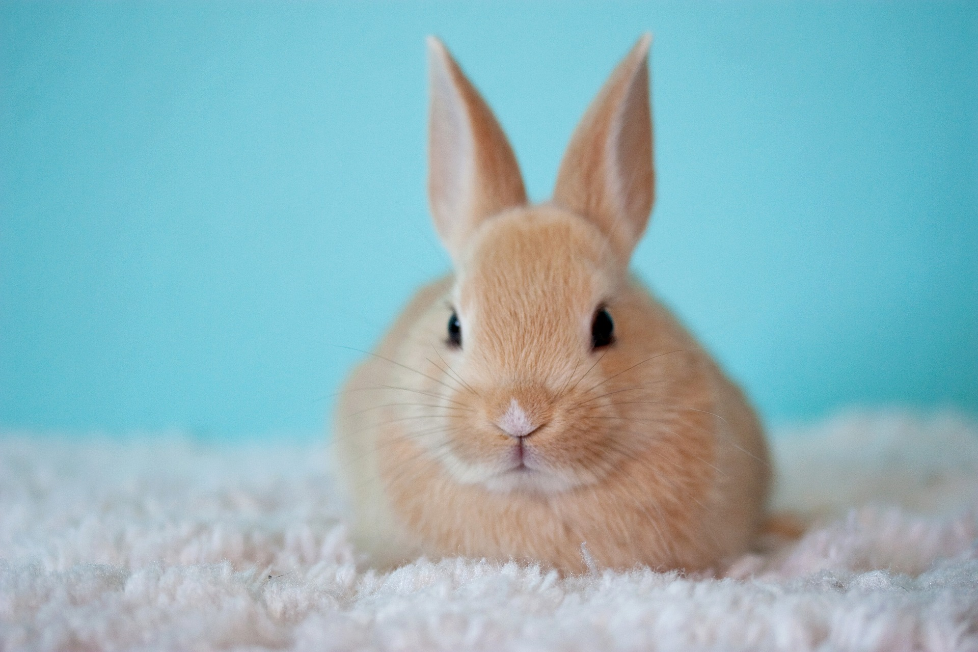 Rabbit Health Advice - Twickenham Veterinary Surgery