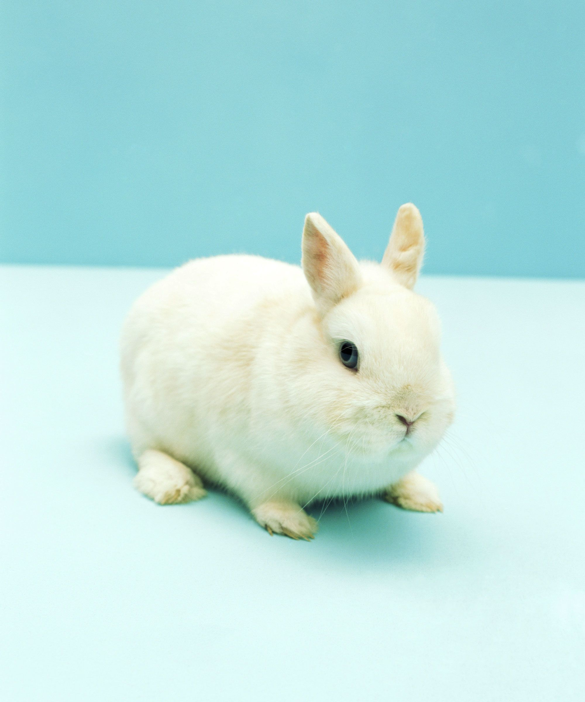 Why Do We Say Rabbit Rabbit First Of The Month Luck