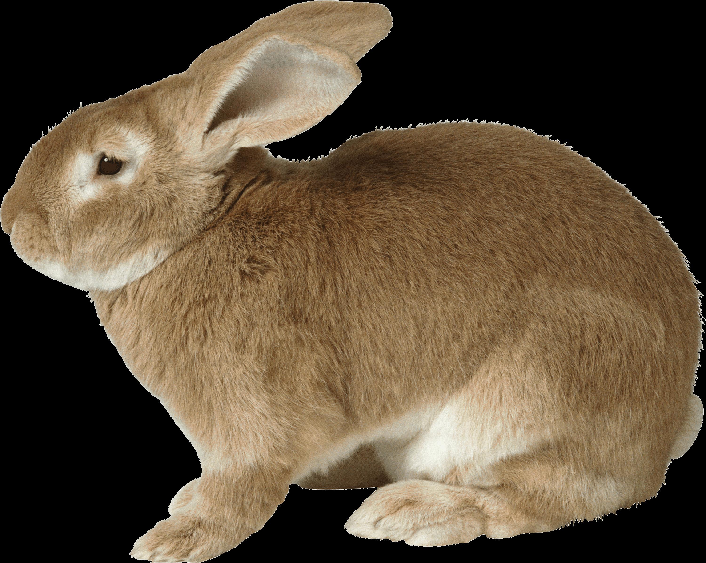 Fat Rabbit transparent PNG - StickPNG