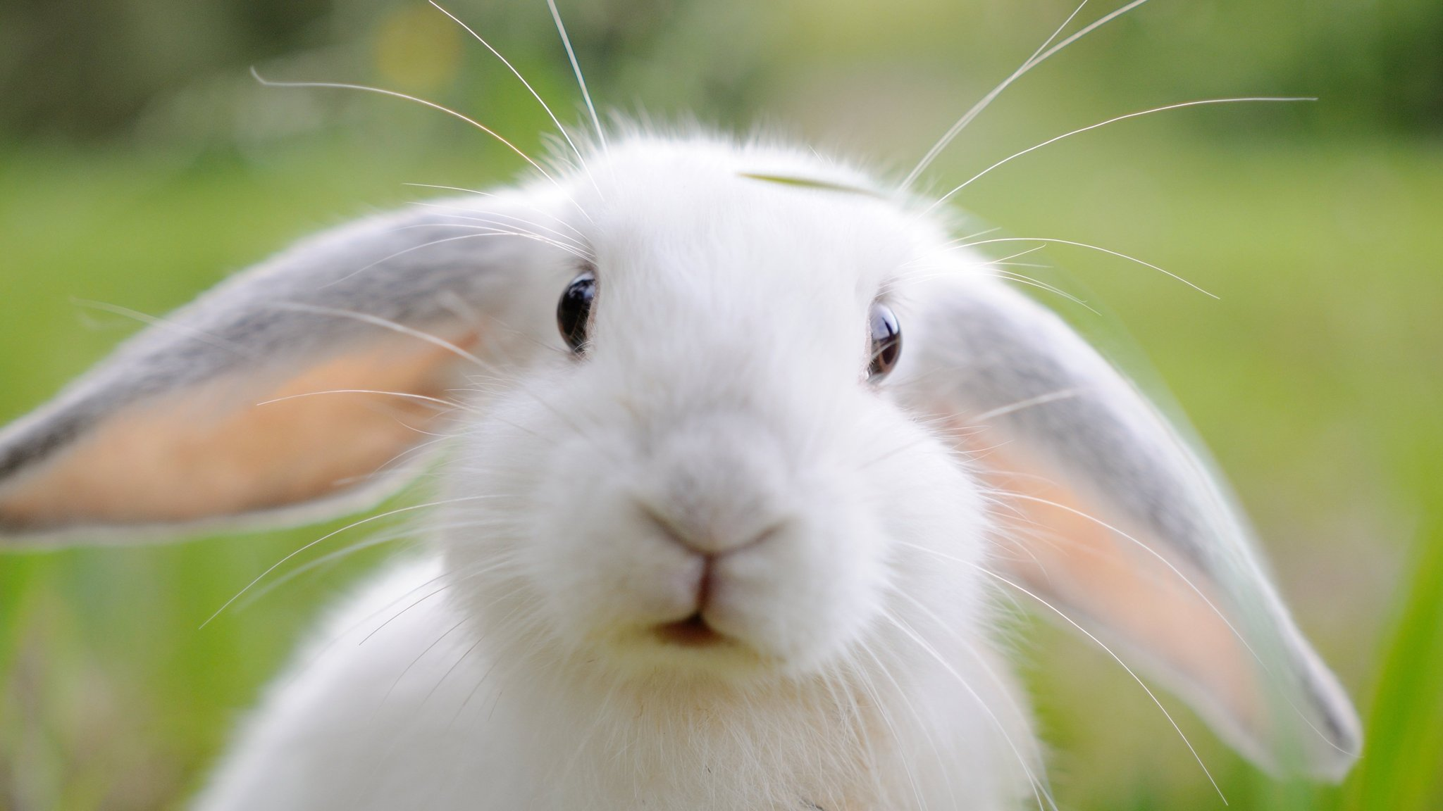 Rabbit Starvation and Missional Youth Ministry - samluce.com