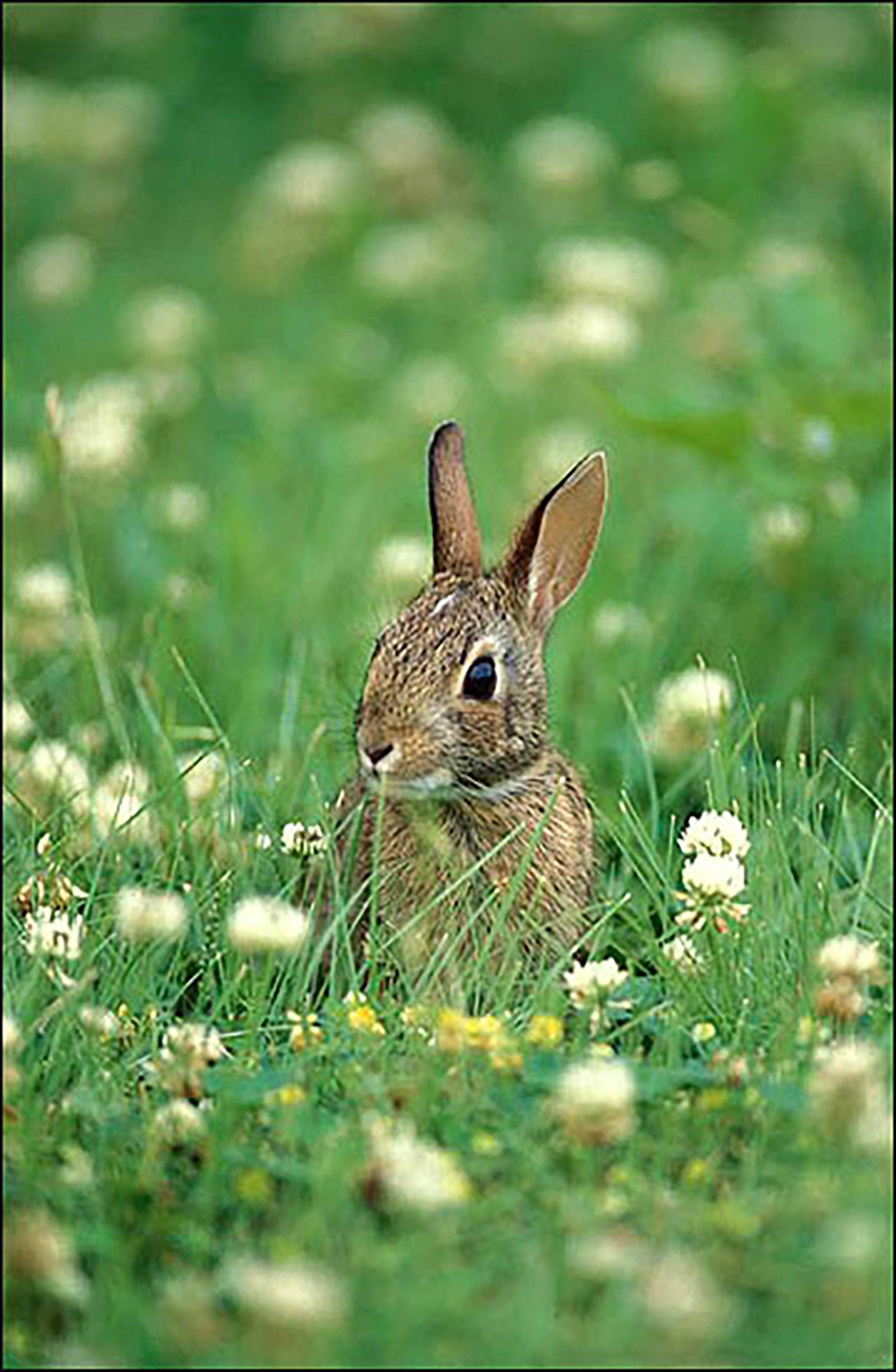 CAES NEWSWIRE | Rabbit control