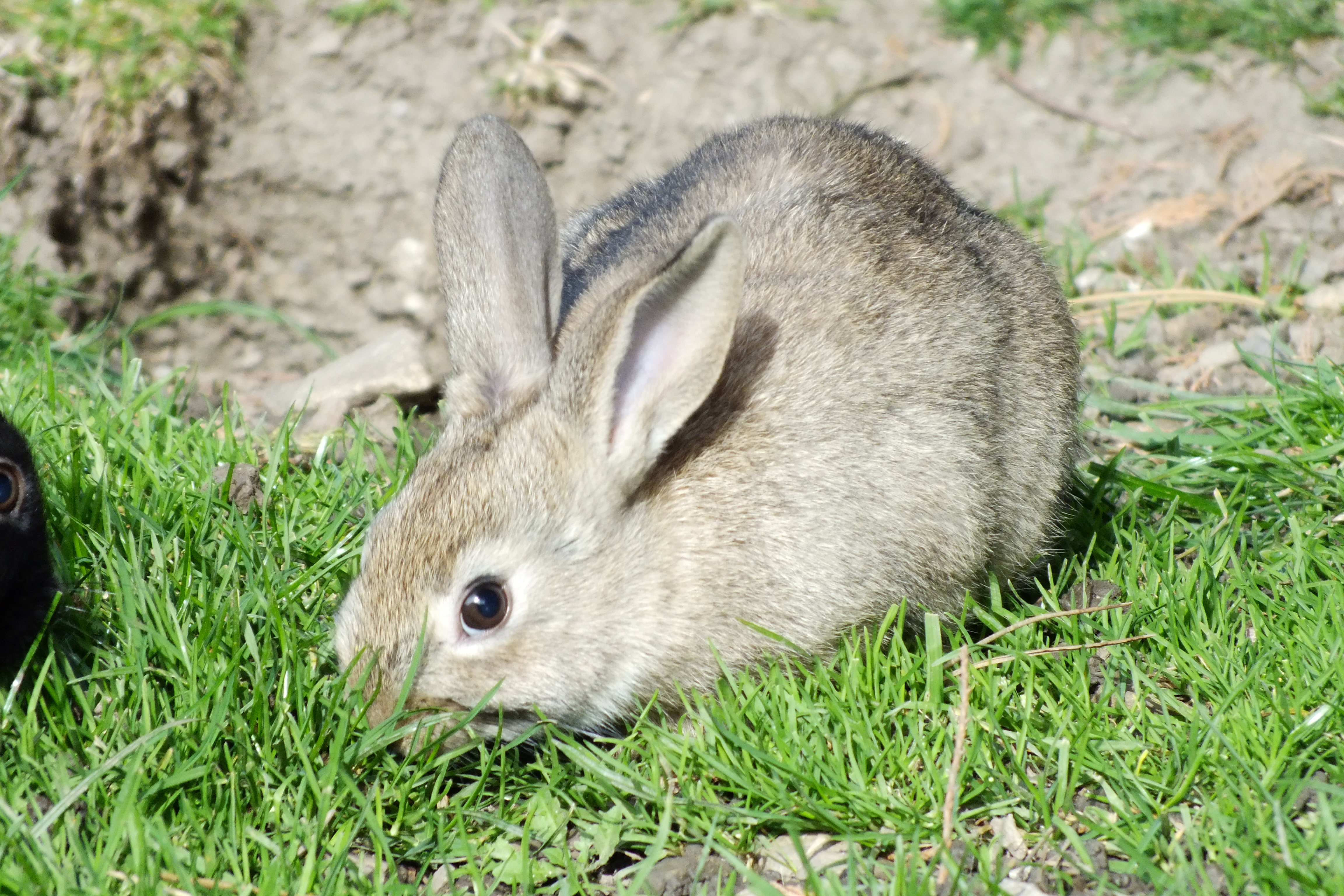 Rabbit, HQ Photo