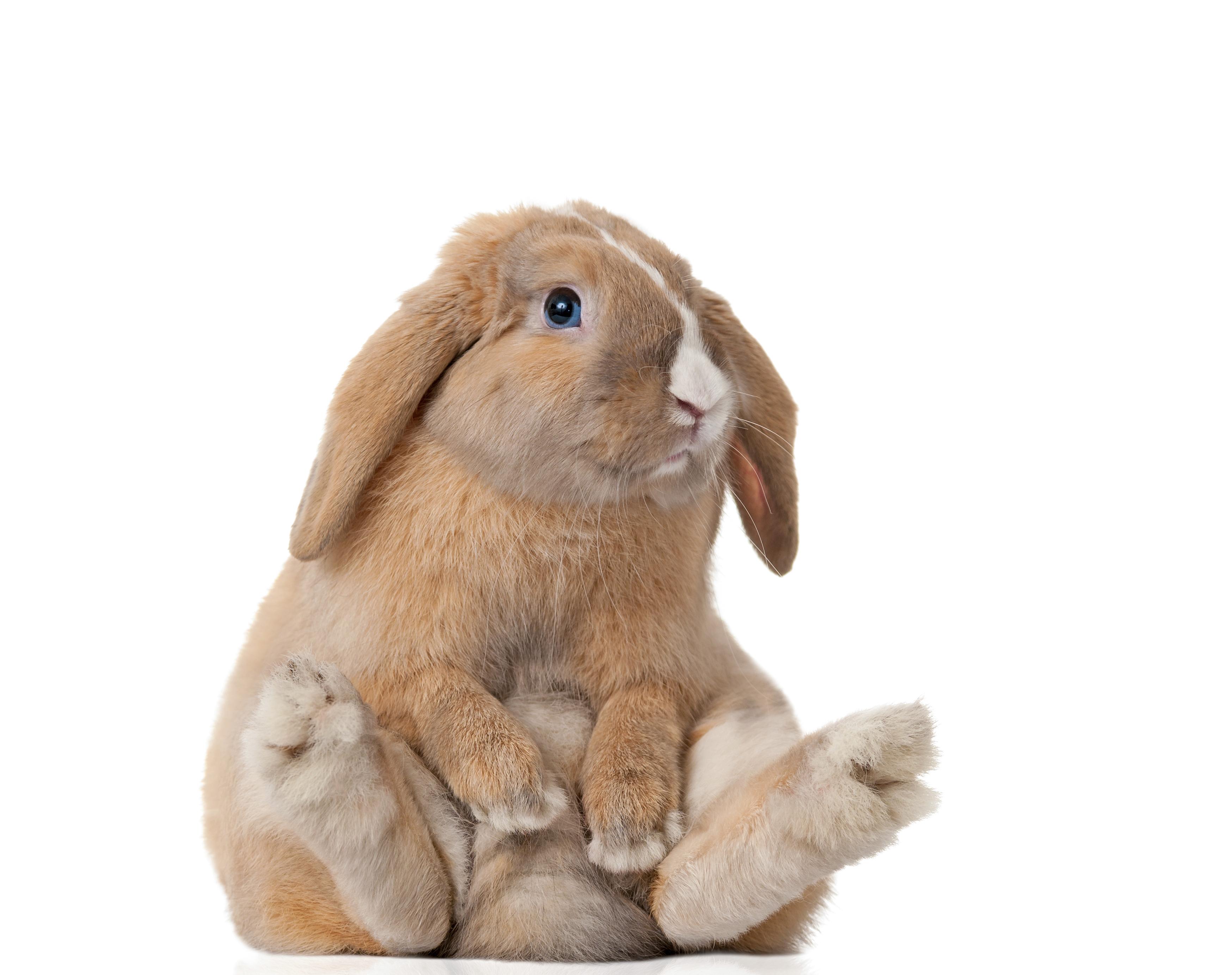 10 Reasons Rescued Rabbits Rule | Petfinder
