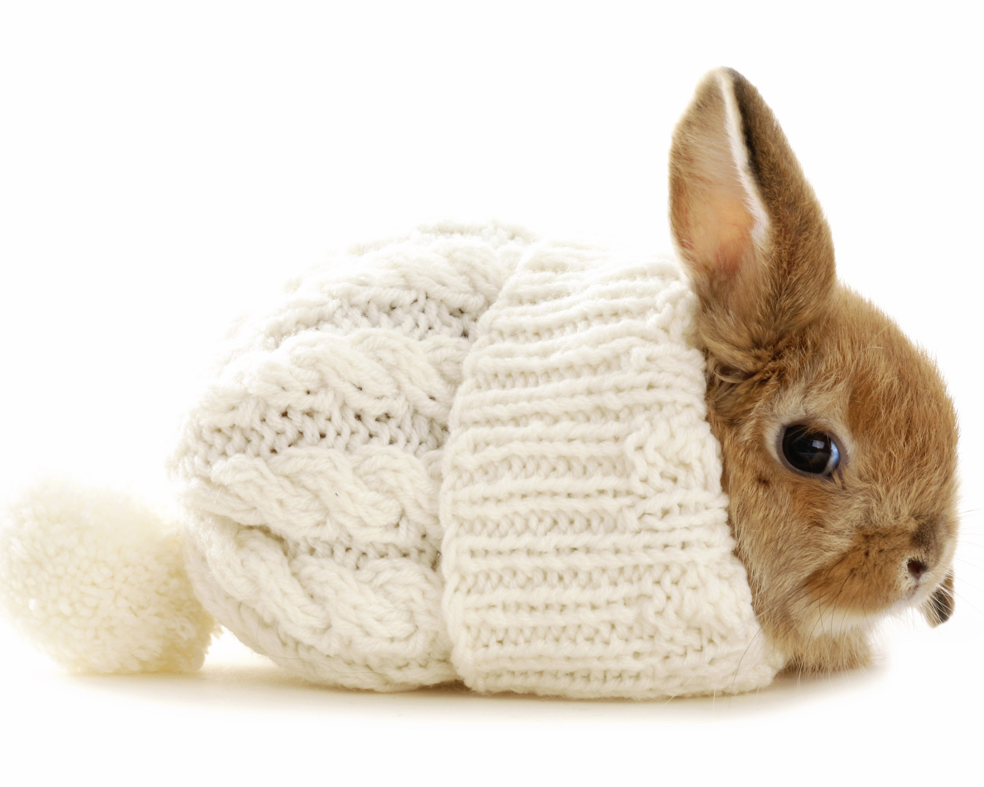Hopping mad about Rabbits? | Tauranga Veterinary Services