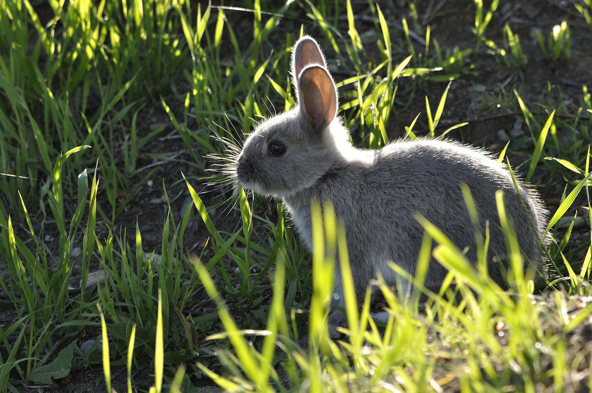 The 5 Best Rabbit Repellent Sprays: These Rabbit Deterrent Spray ...