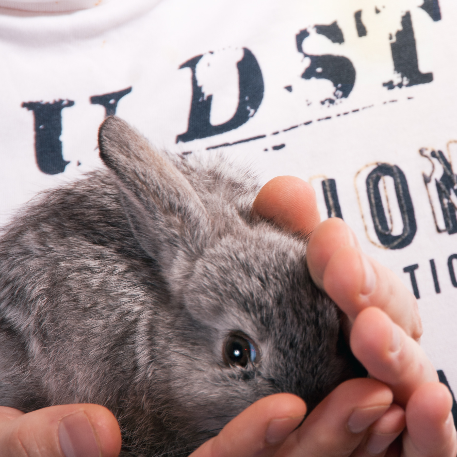 rabbit, Animal, Baby, Bunny, Cute, HQ Photo