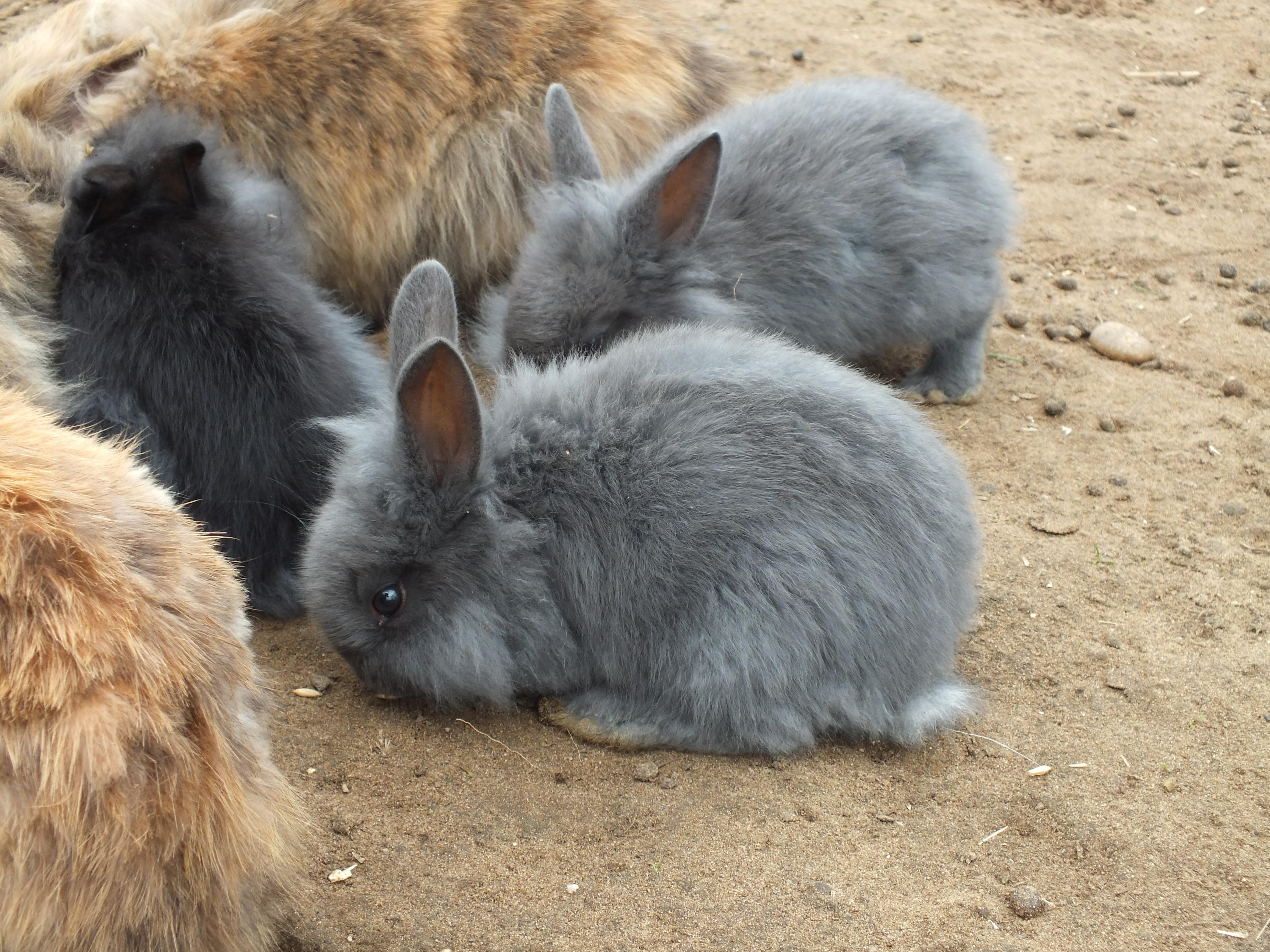 Rabbits, Animals, Bunnies, Bunny, Fluffy, HQ Photo