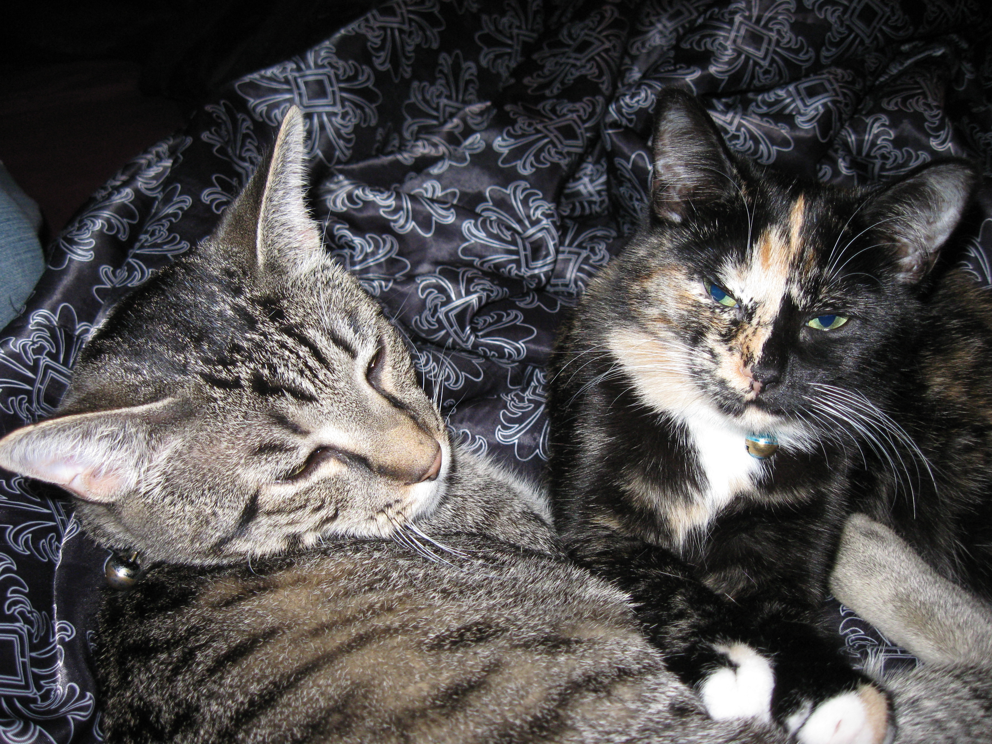 Radar and harlequin lying together 1 photo