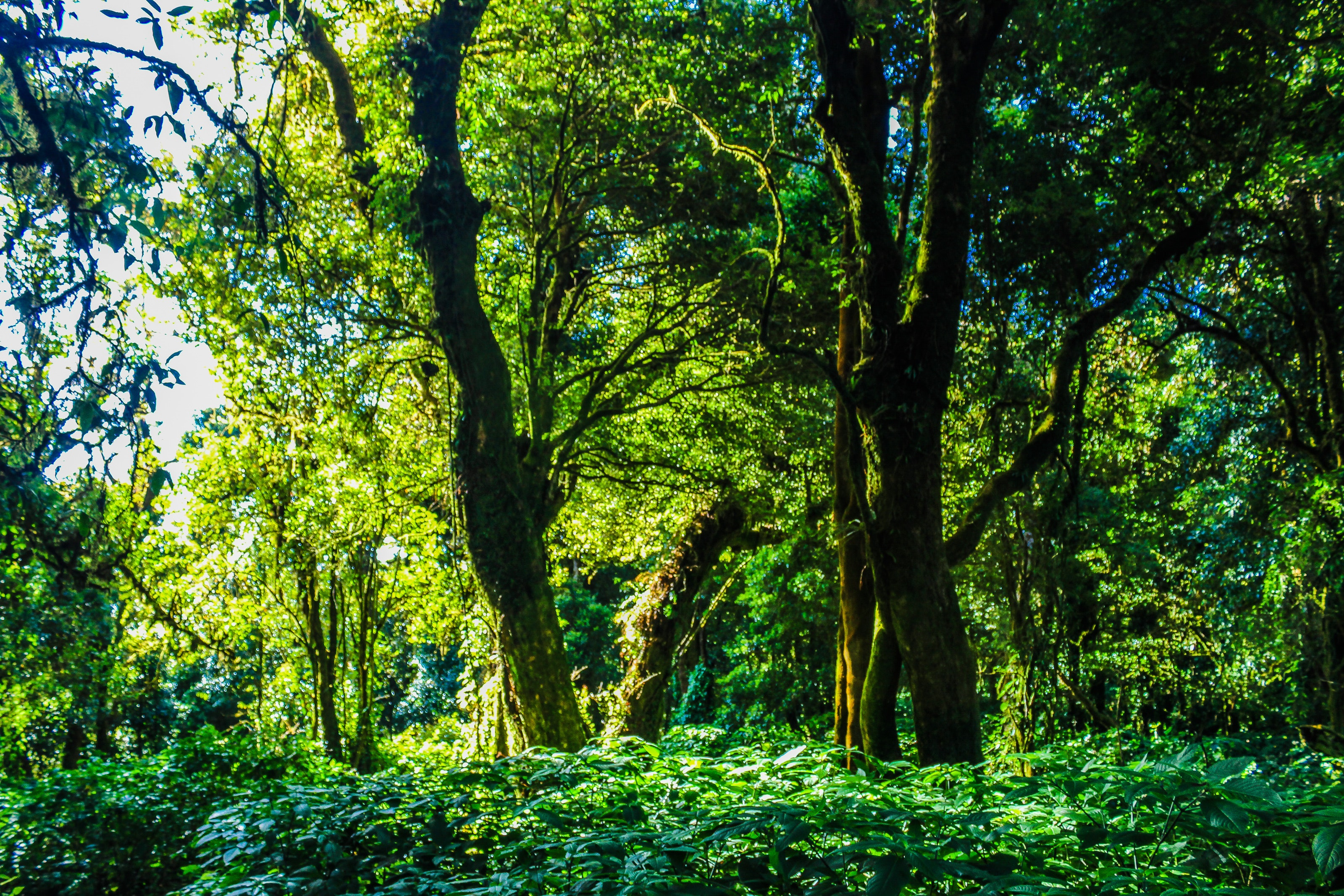 Rain Forest, Background, Outdoor, Trees, Tourism, HQ Photo