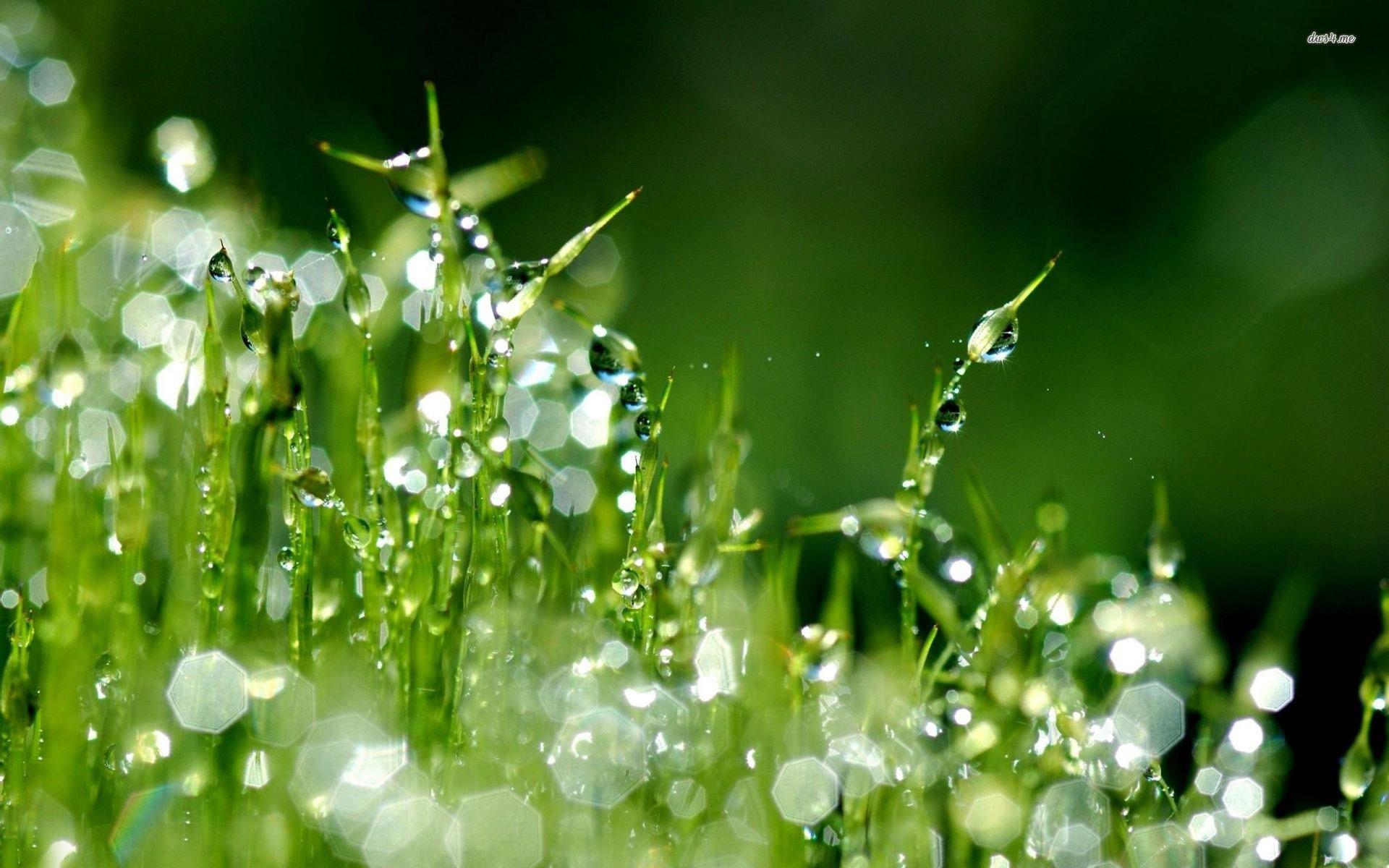 Free photo: Raindrops on grass - Close, Close-up, Closeup - Free ...
