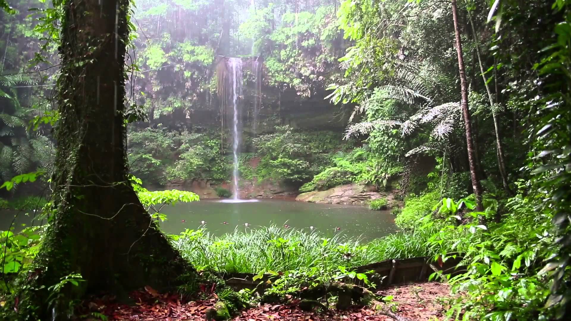 Free photo: Rainforest - Tree, Wild, Wood - Free Download