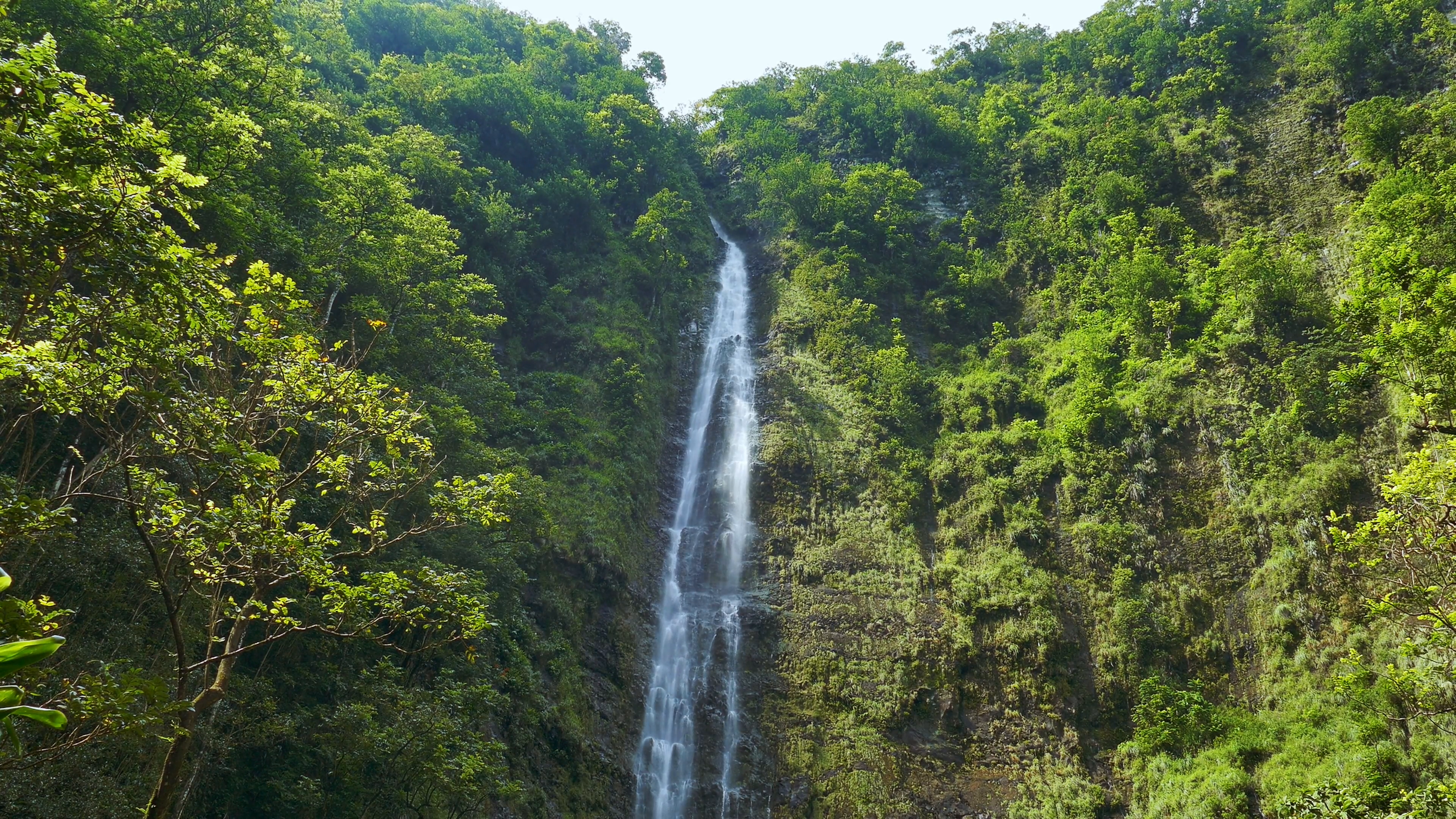 Waterfall Forest Footage Hawaii Green Lush Foliage Travel Nature ...