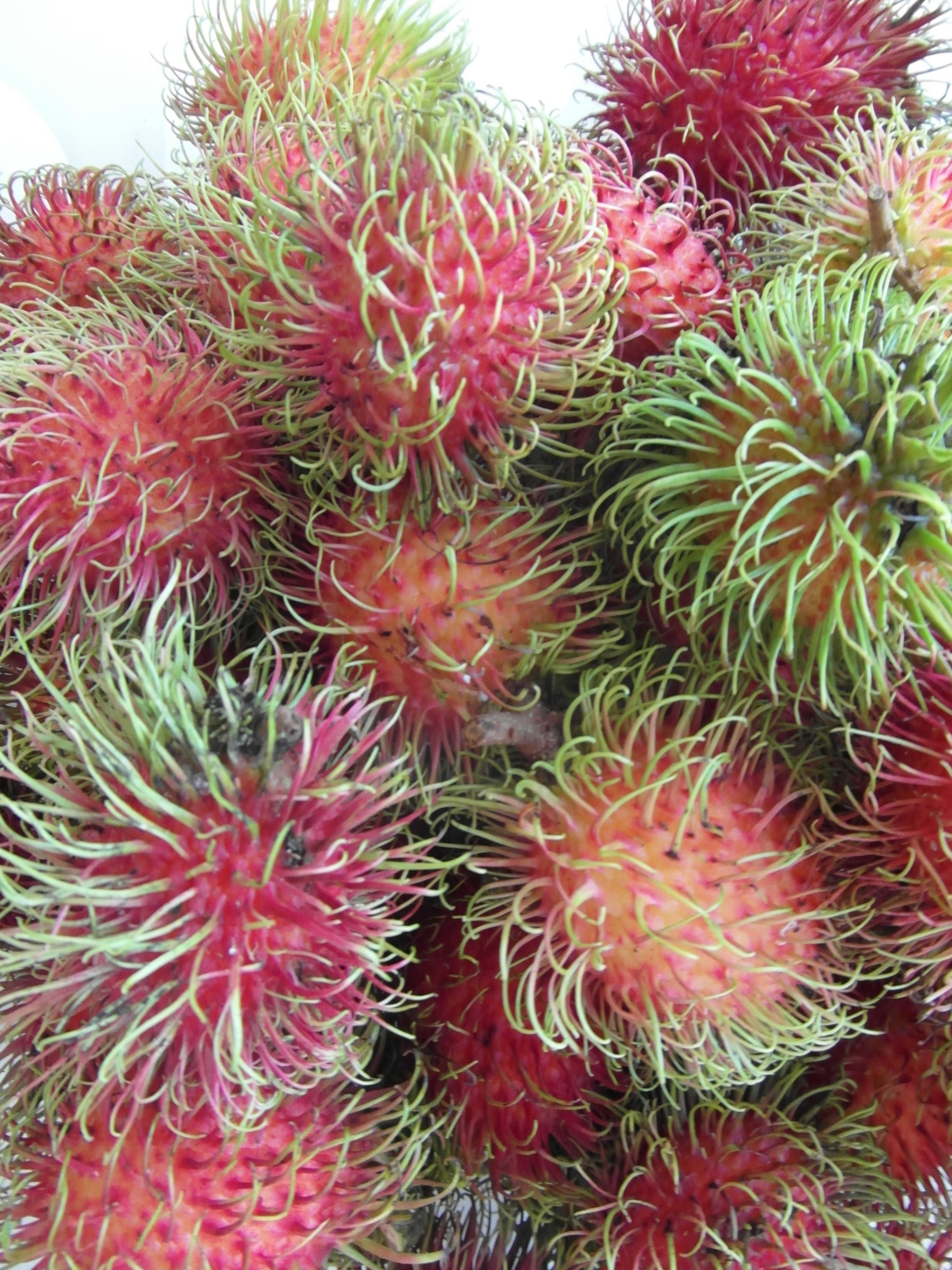 Rambutan fruits photo