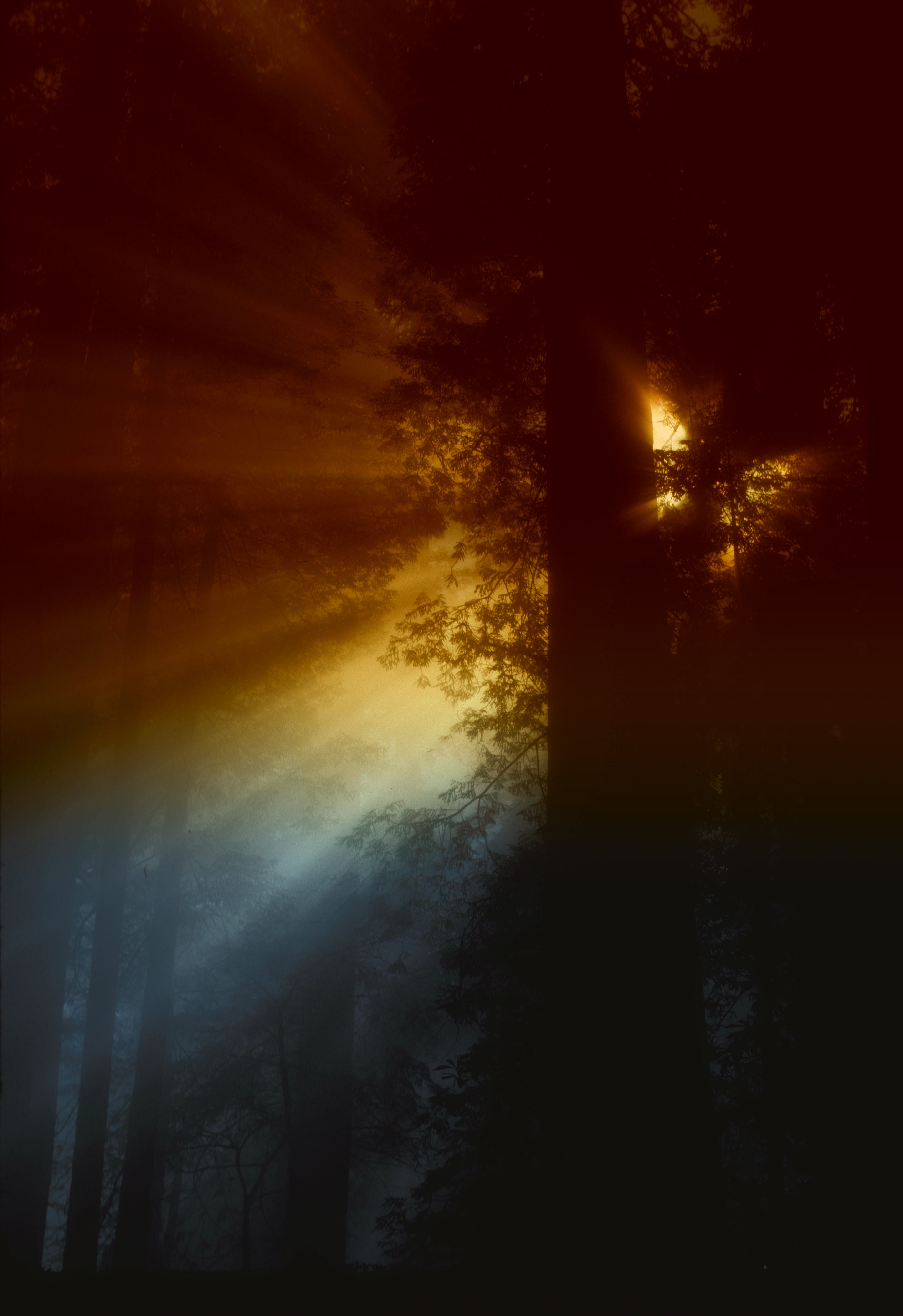 Ray of Sunlight Flowing in Trees, Forest, Light, Nature, Rays, HQ Photo