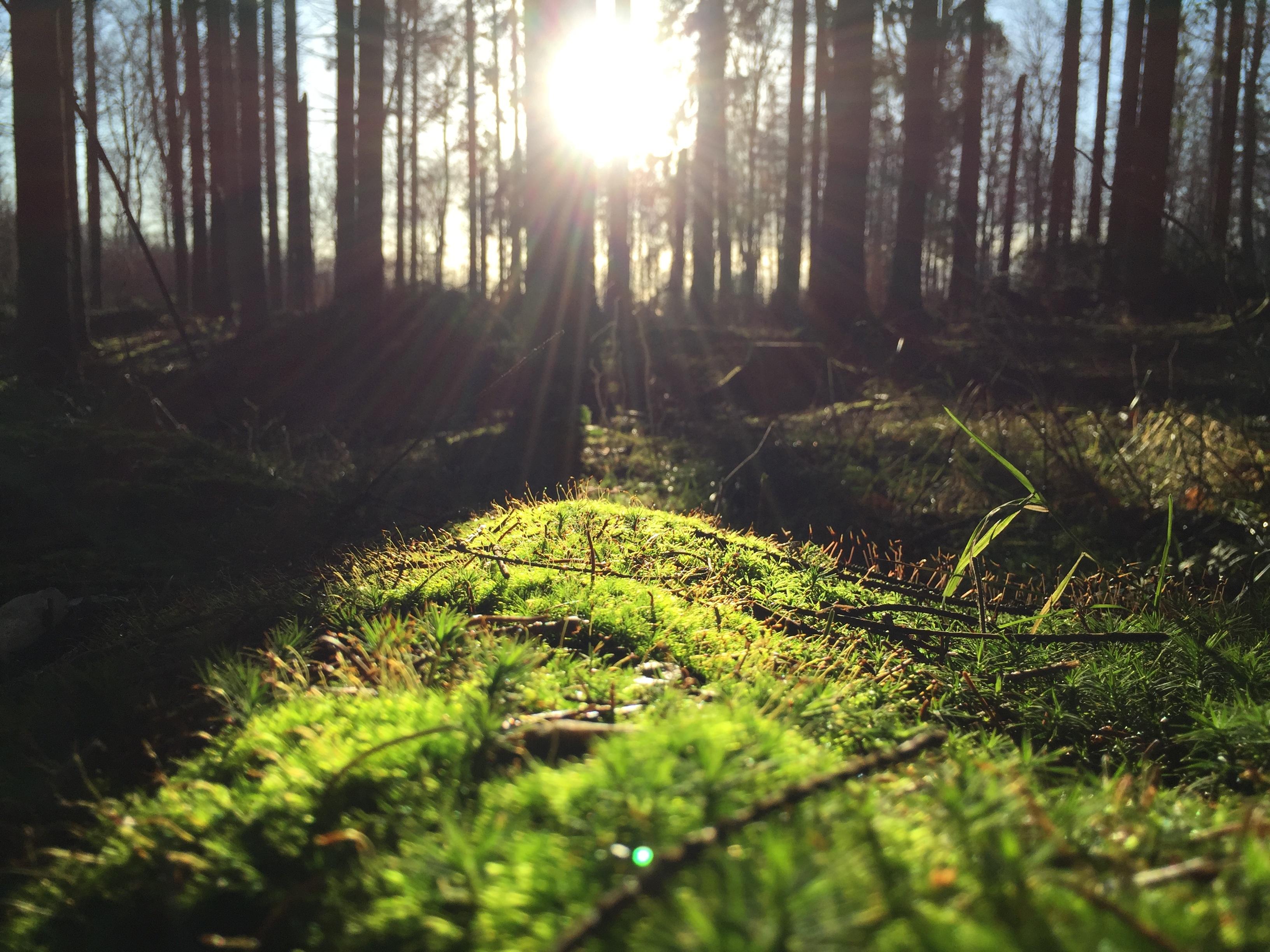 Rays hitting the grass photo