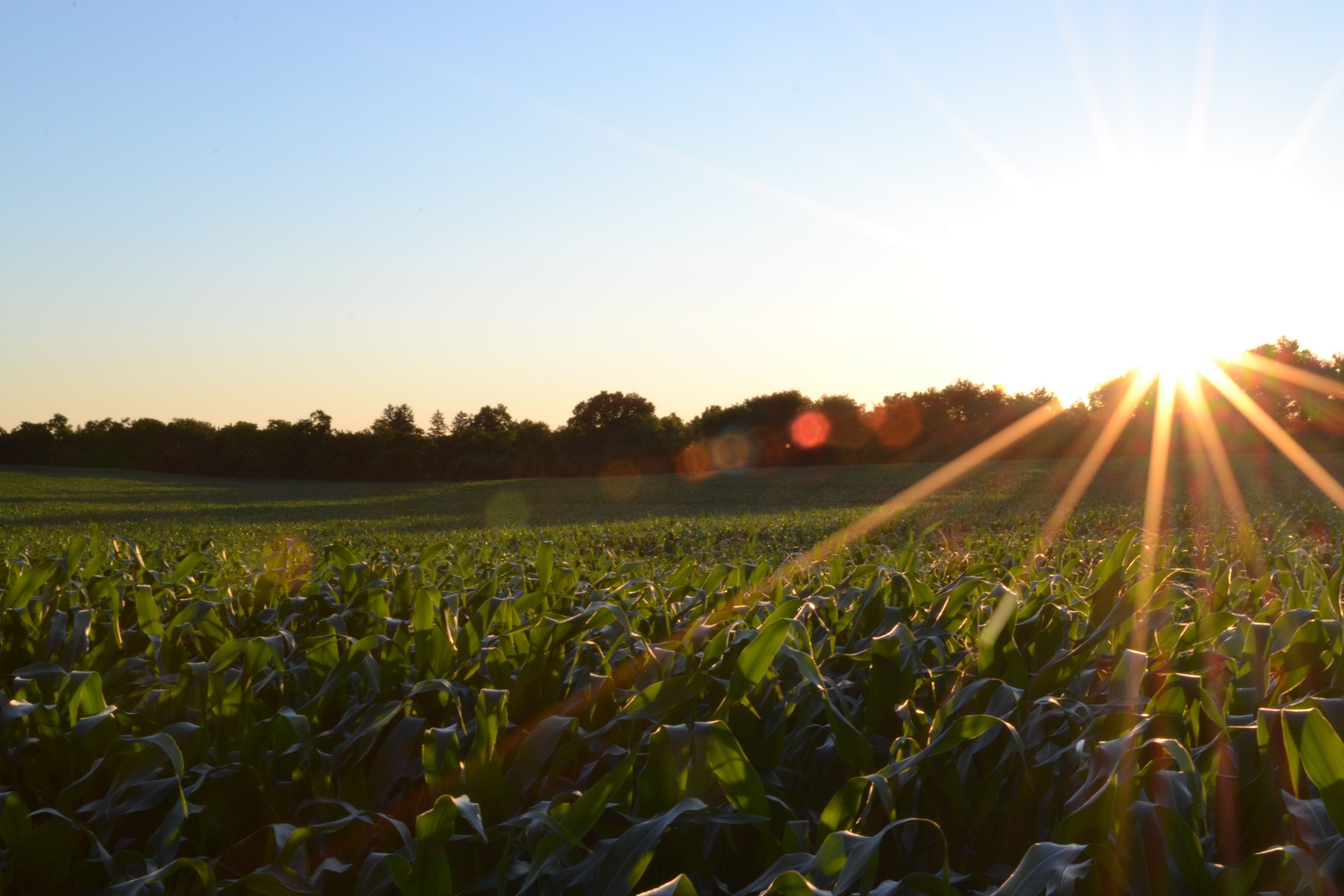 Rays of sunlight photo