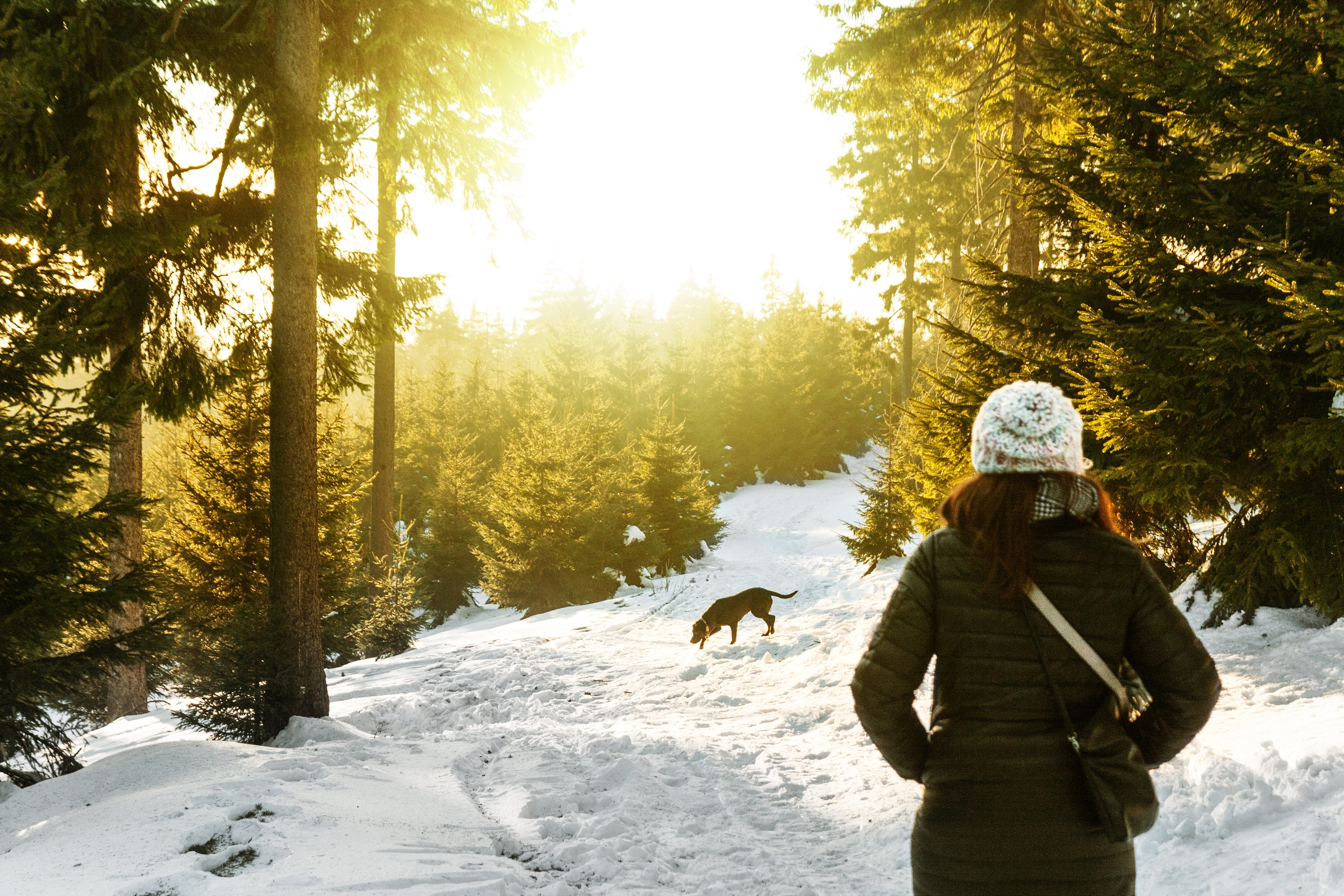 Rear View of Woman in Snow Covered Forest, Adult, Snow, Person, Pine trees, HQ Photo