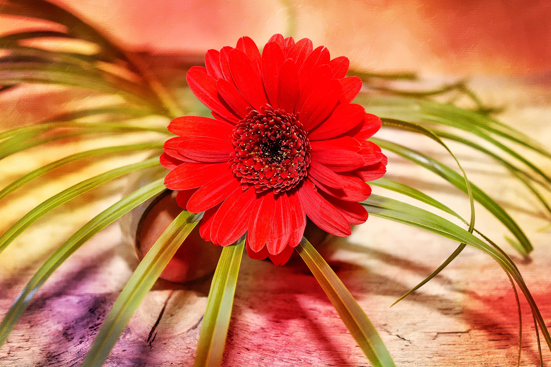 Red, Flower, Fresh, Freshness, Nature, HQ Photo