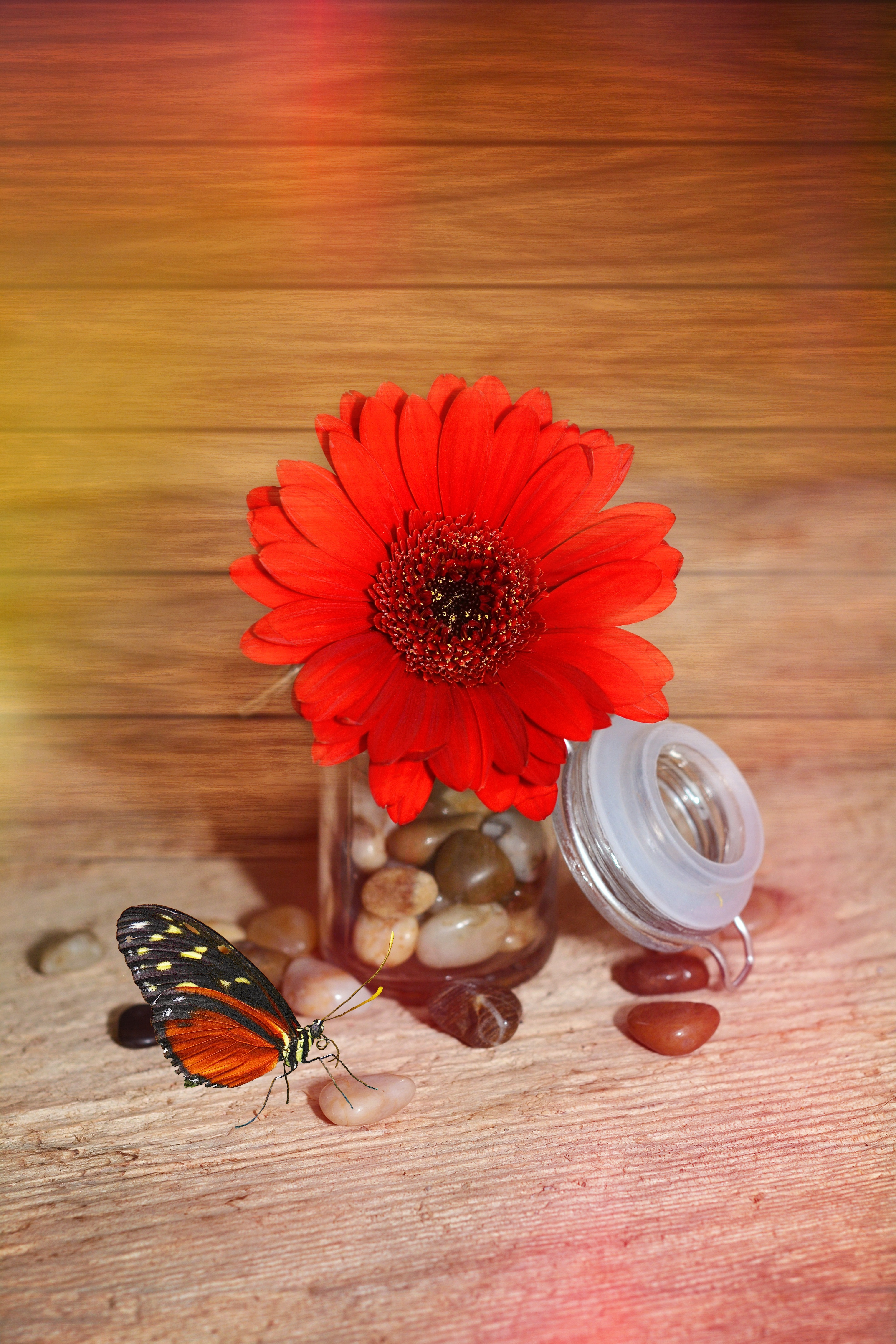 Red, Nature, Fresh, Flower, Freshness, HQ Photo