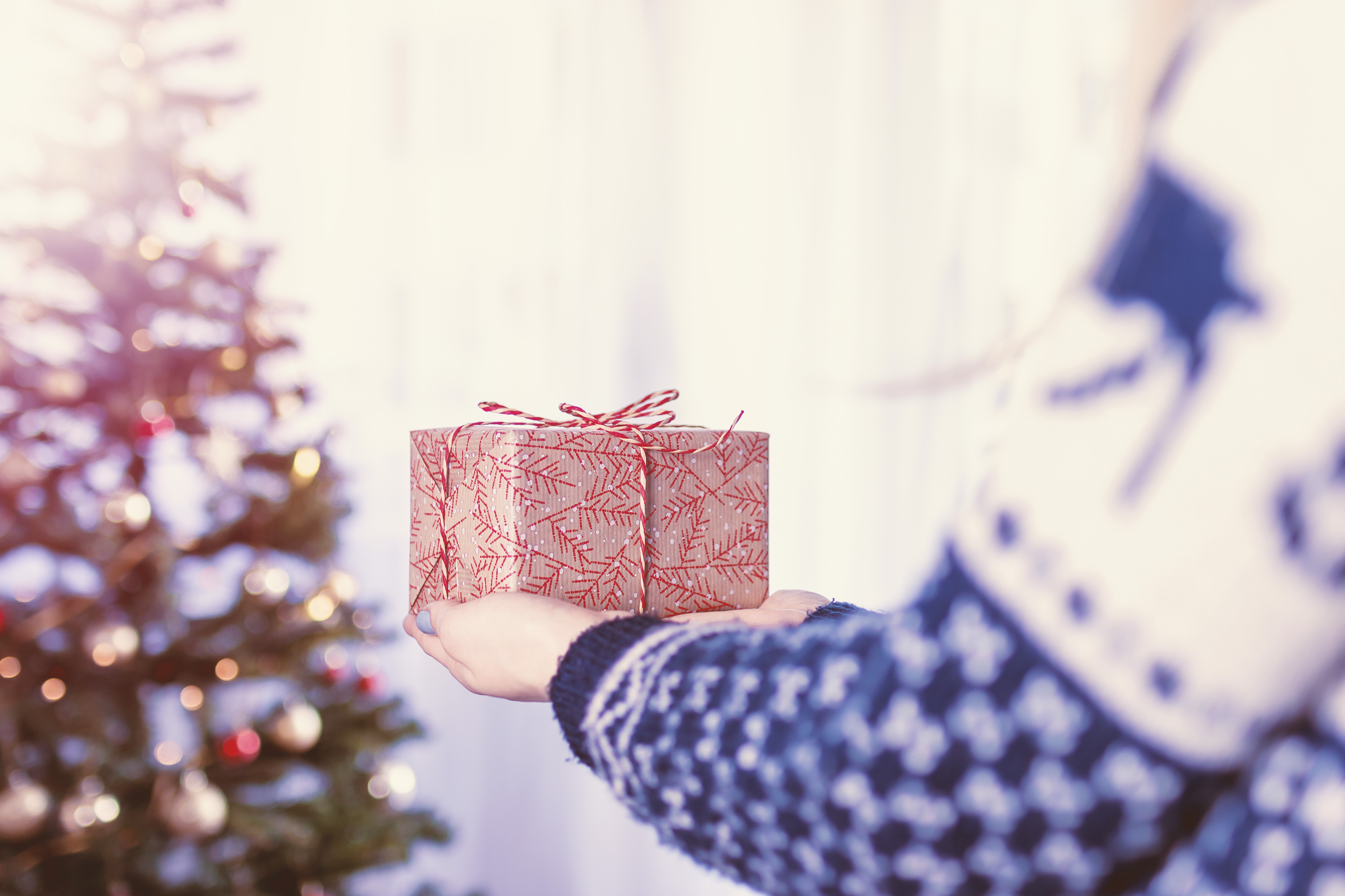 Red and Gray Gift, Blur, Indoors, White, Tree, HQ Photo