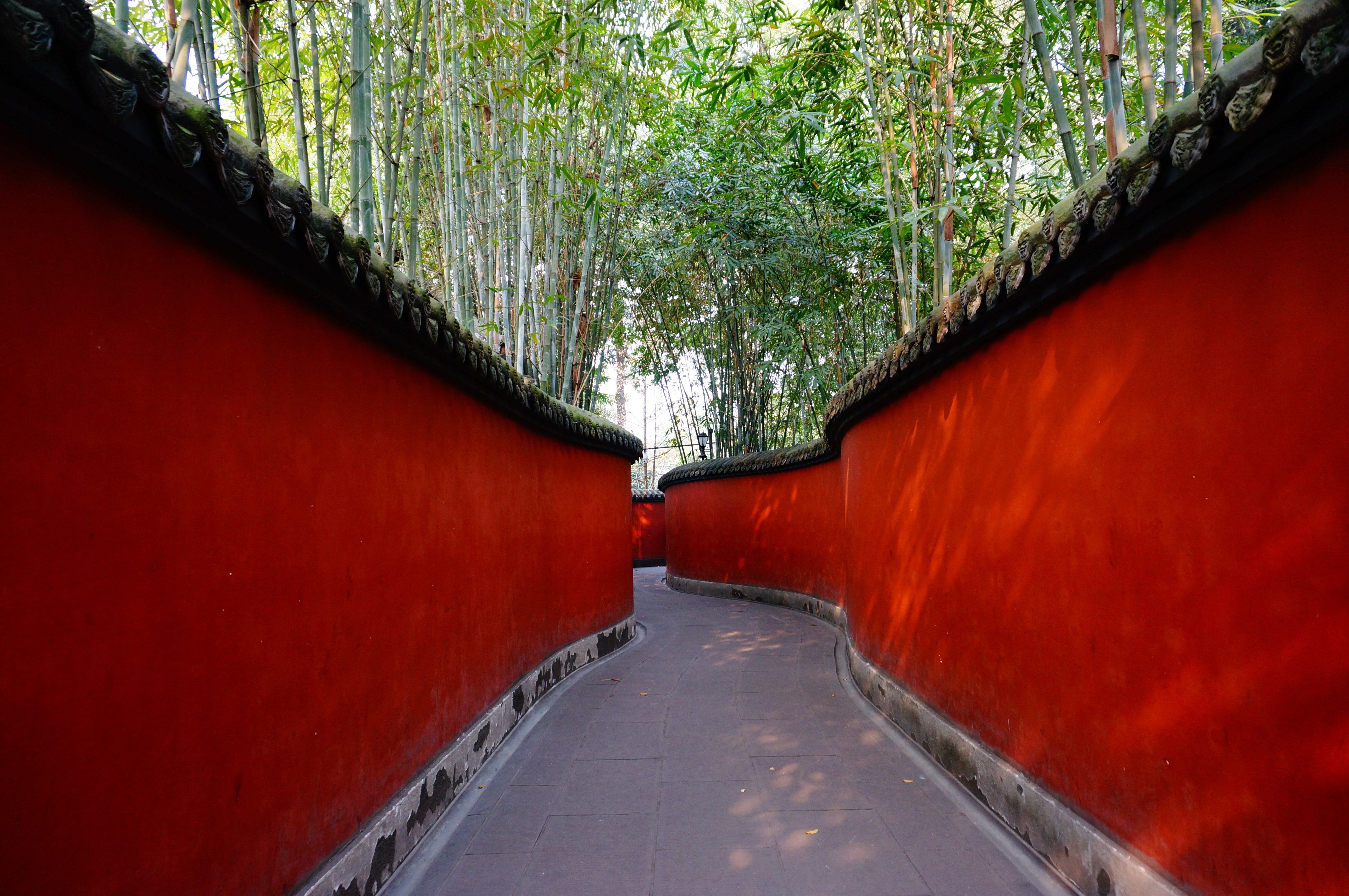 Red and Gray Pathway Near Trees, Bamboo, Path, Trees, Scenic, HQ Photo