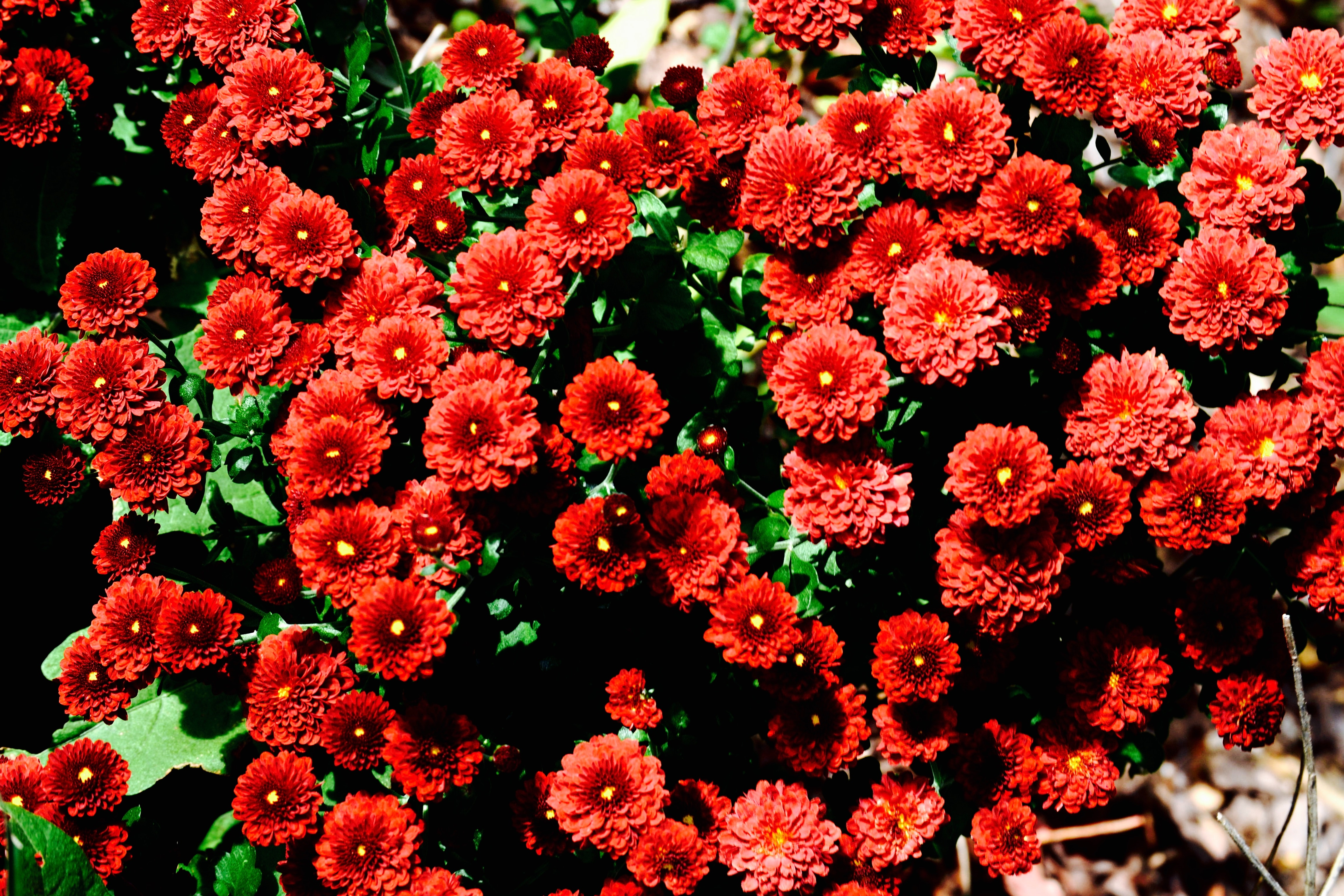 Red and green flowers photo